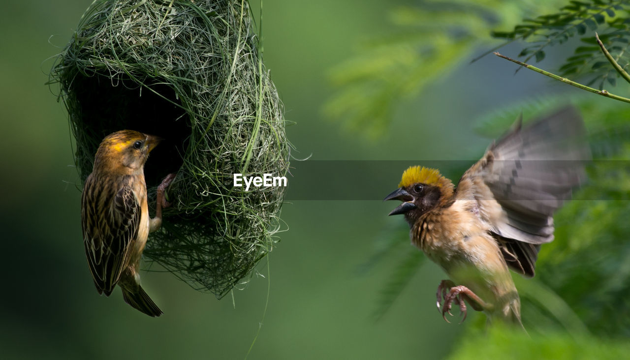 Close-Up Of Birds Perching By Nest