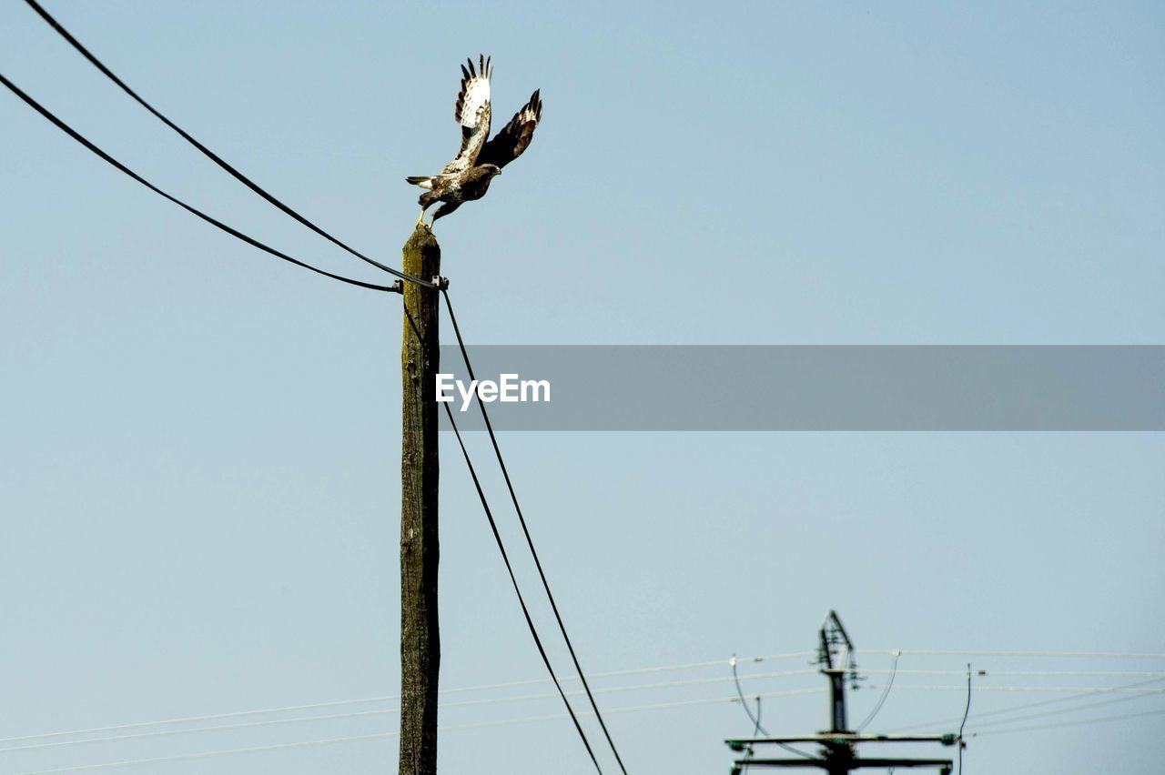 sky, cable, electricity, low angle view, clear sky, connection, power line, technology, electricity pylon, power supply, fuel and power generation, no people, nature, day, copy space, animal themes, animal, outdoors, animal wildlife, animals in the wild, electrical equipment, telephone line