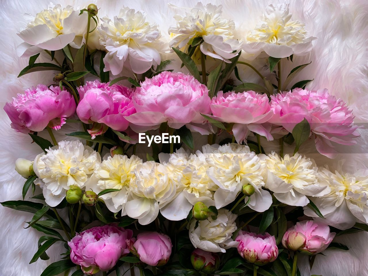 flowering plant, flower, vulnerability, freshness, plant, fragility, beauty in nature, petal, pink color, flower head, close-up, no people, inflorescence, nature, outdoors, high angle view, growth, day, bouquet, flower arrangement, bunch of flowers