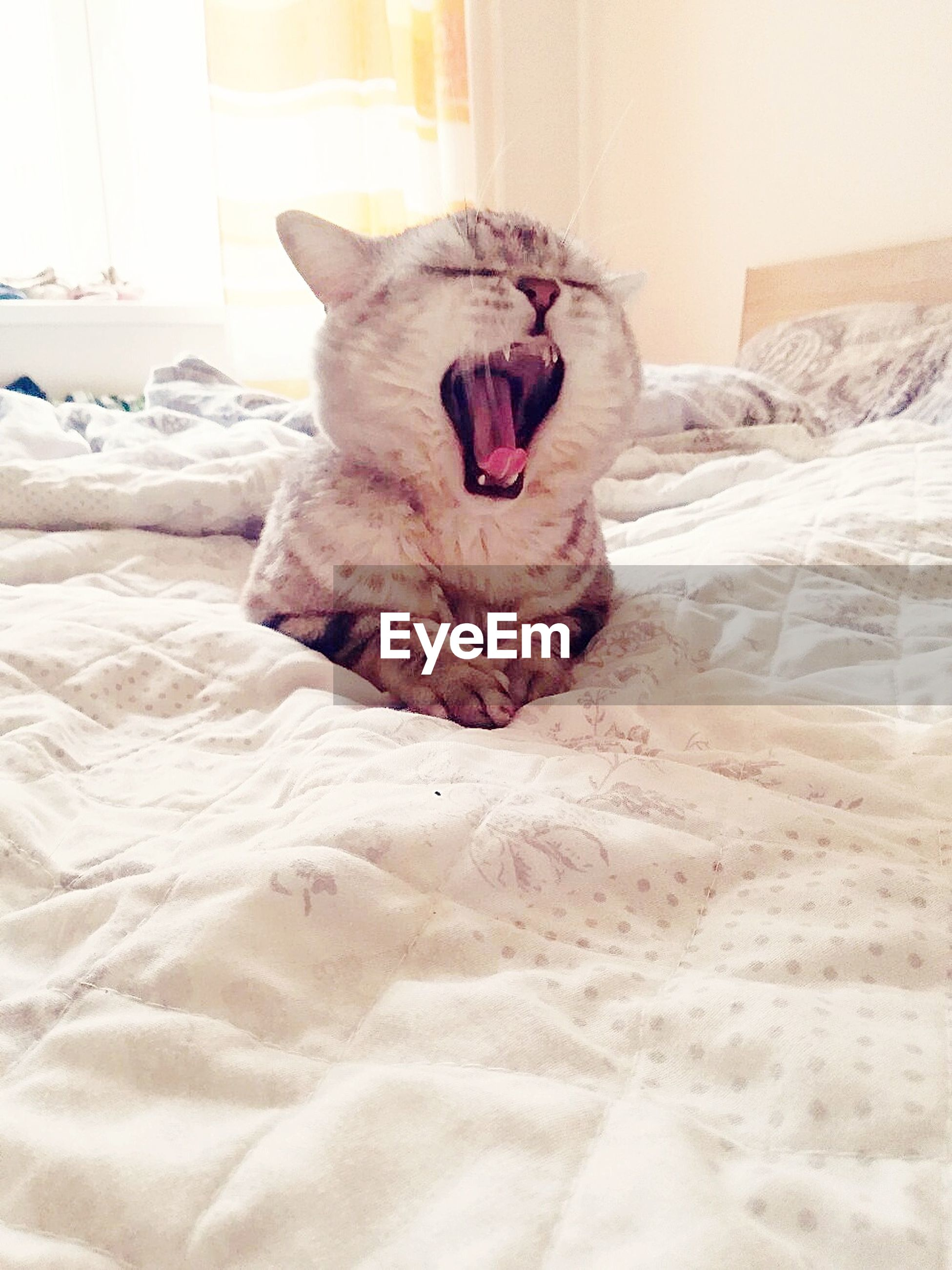 one animal, yawning, animal themes, relaxation, bed, pets, mammal, domestic animals, mouth open, indoors, sleeping, lying down, domestic cat, feline, comfortable, home interior, bedroom, no people, day