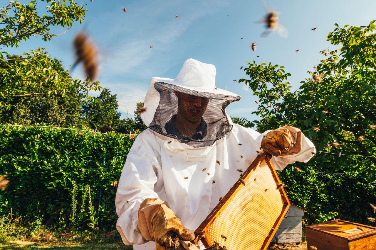Beekeeper Inspects Beehive
