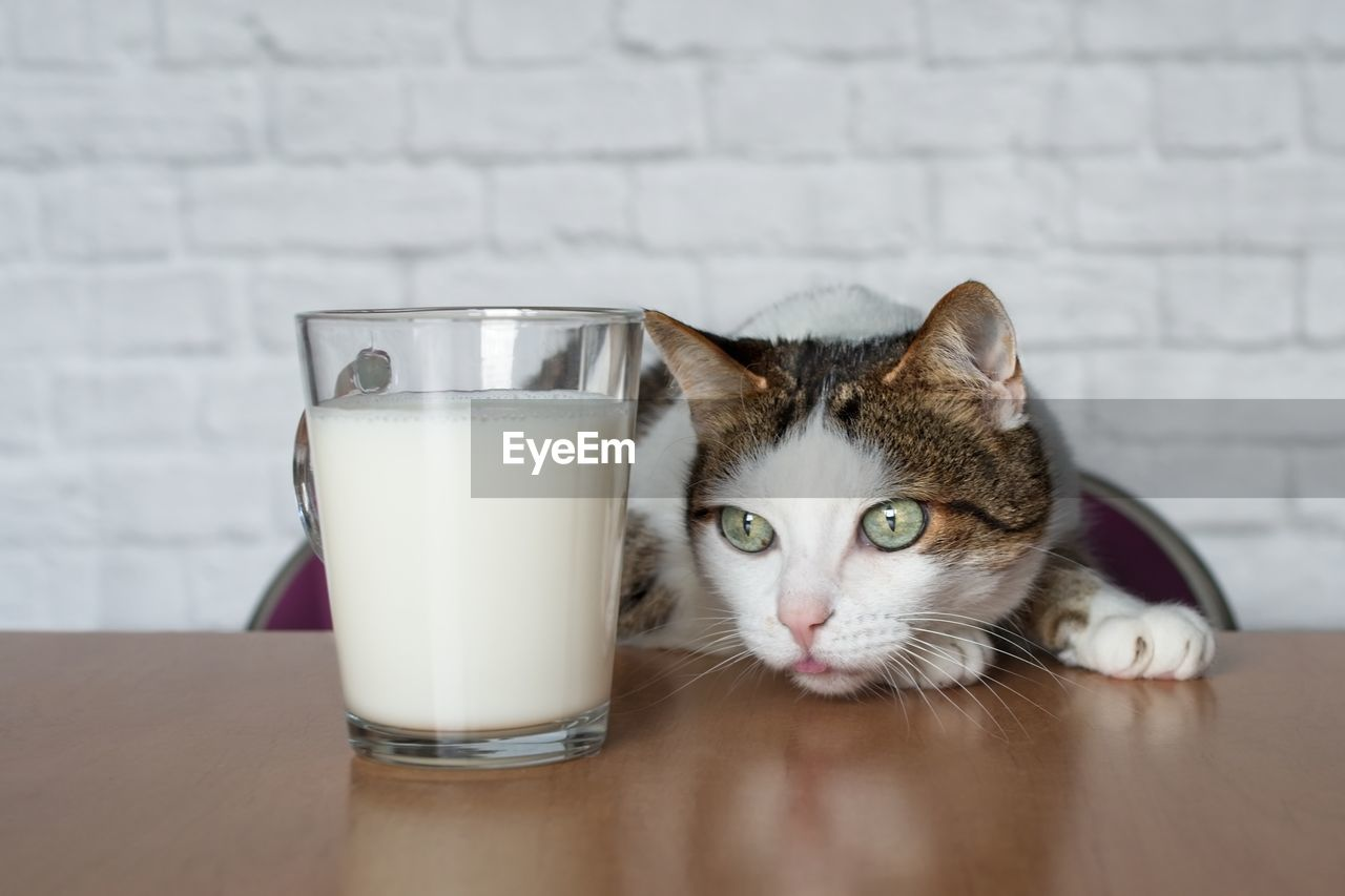 Close-Up Of Cat Leaning By Milk Glass On Table