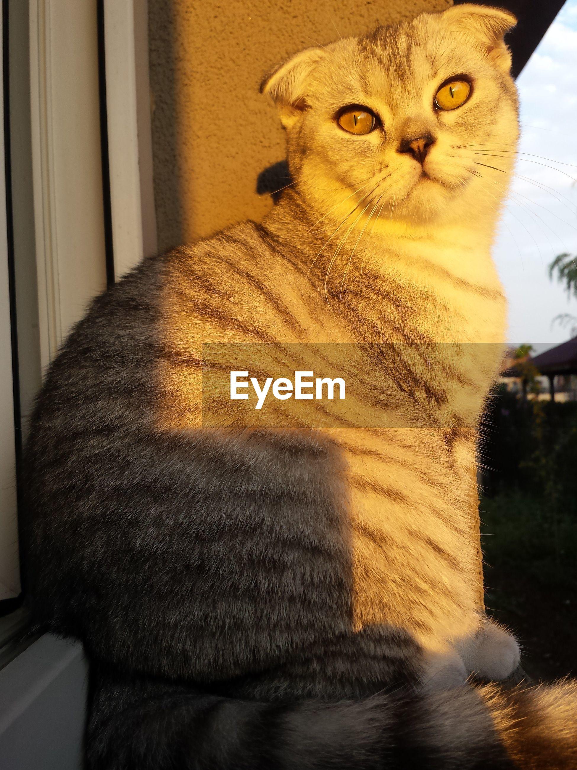 Portrait of cat outside house