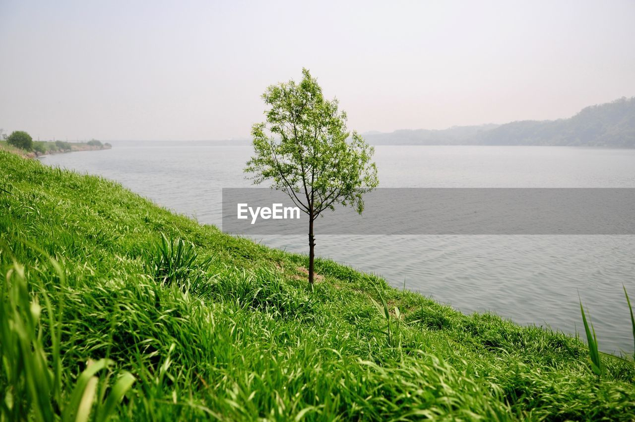 plant, beauty in nature, tranquility, tranquil scene, grass, water, green color, growth, scenics - nature, nature, no people, sky, day, tree, idyllic, land, sea, non-urban scene, outdoors
