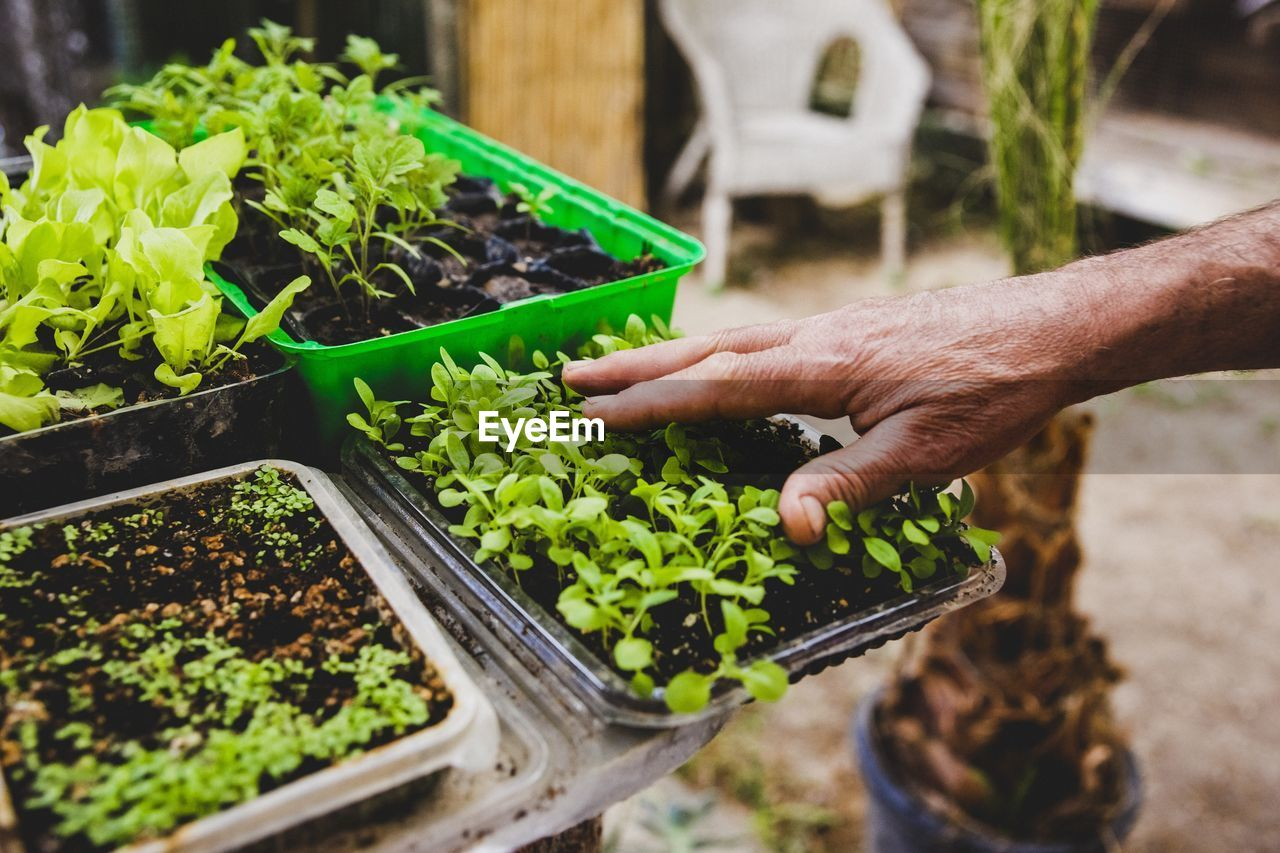 human hand, hand, green color, human body part, food and drink, real people, one person, vegetable, food, growth, freshness, container, plant, holding, gardening, lifestyles, day, selective focus, leaf, planting, outdoors, flower pot, herb