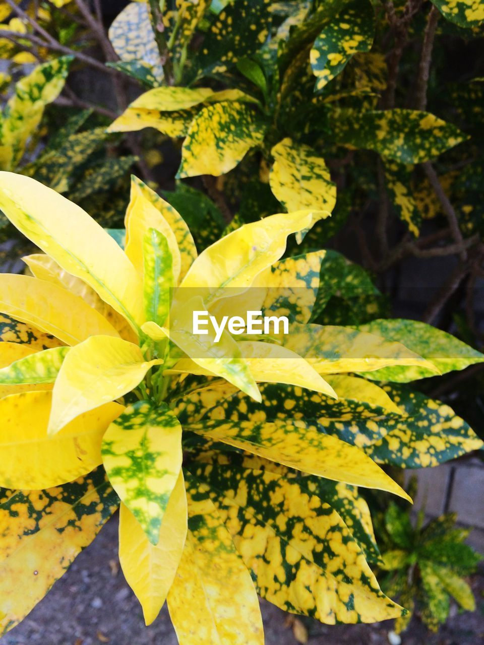 leaf, growth, yellow, nature, green color, day, plant, outdoors, close-up, beauty in nature, no people, freshness, fragility, tree