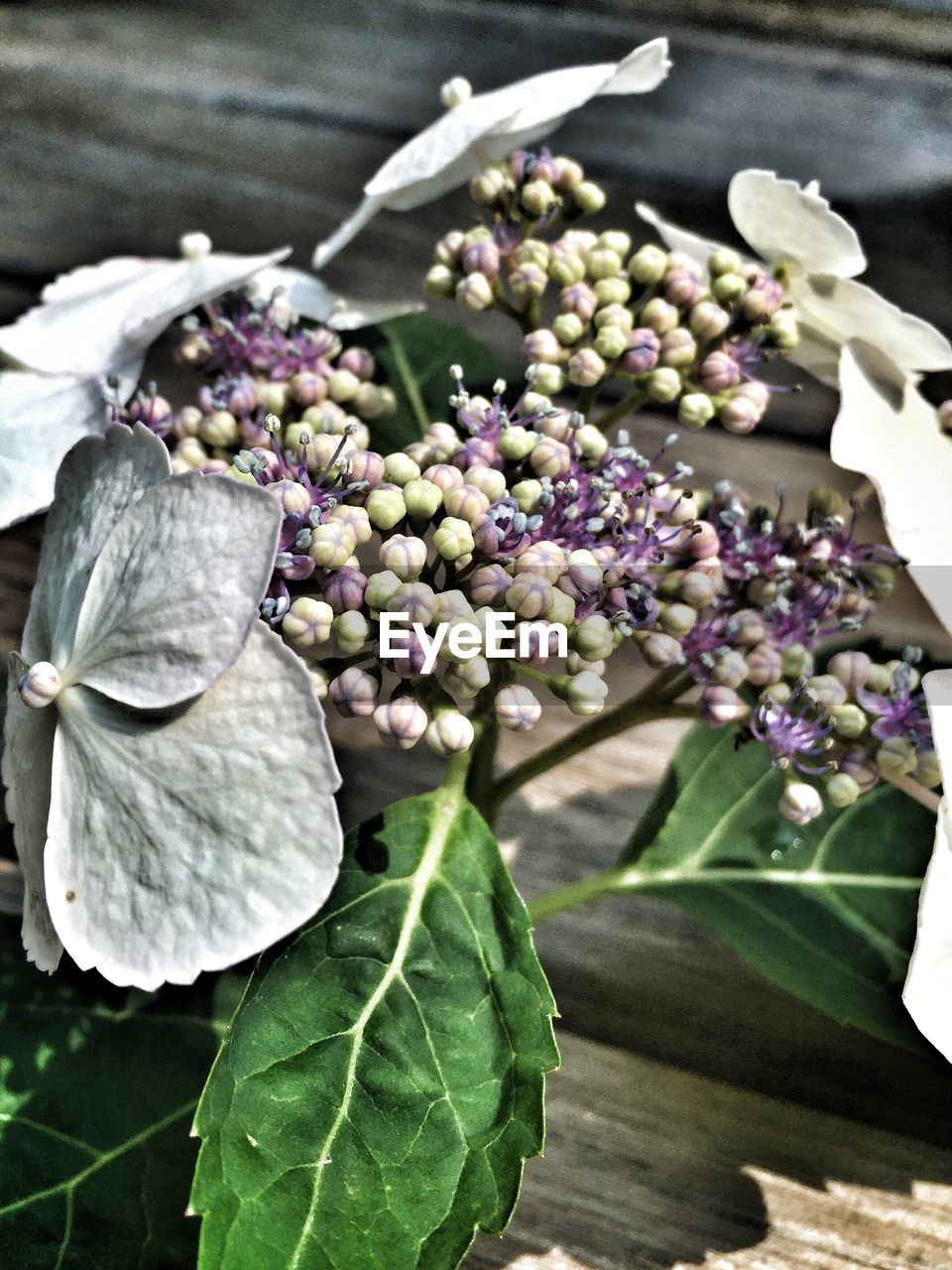 freshness, flower, no people, nature, close-up, beauty in nature, purple, fragility, growth, leaf, day, plant, outdoors, flower head, healthy eating, food