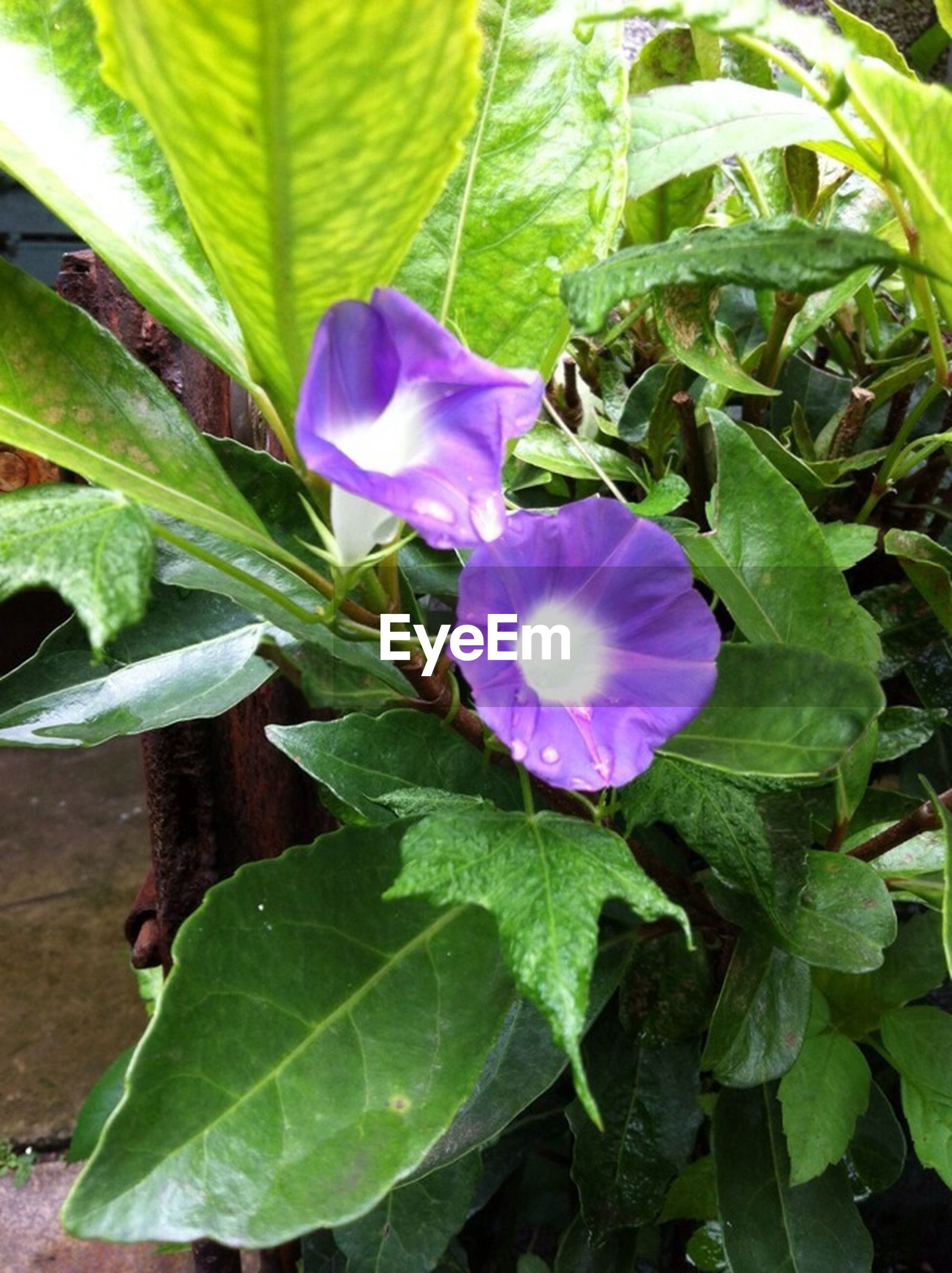 flower, leaf, freshness, growth, petal, fragility, purple, beauty in nature, plant, flower head, green color, nature, close-up, blooming, single flower, in bloom, botany, blossom, stem, no people