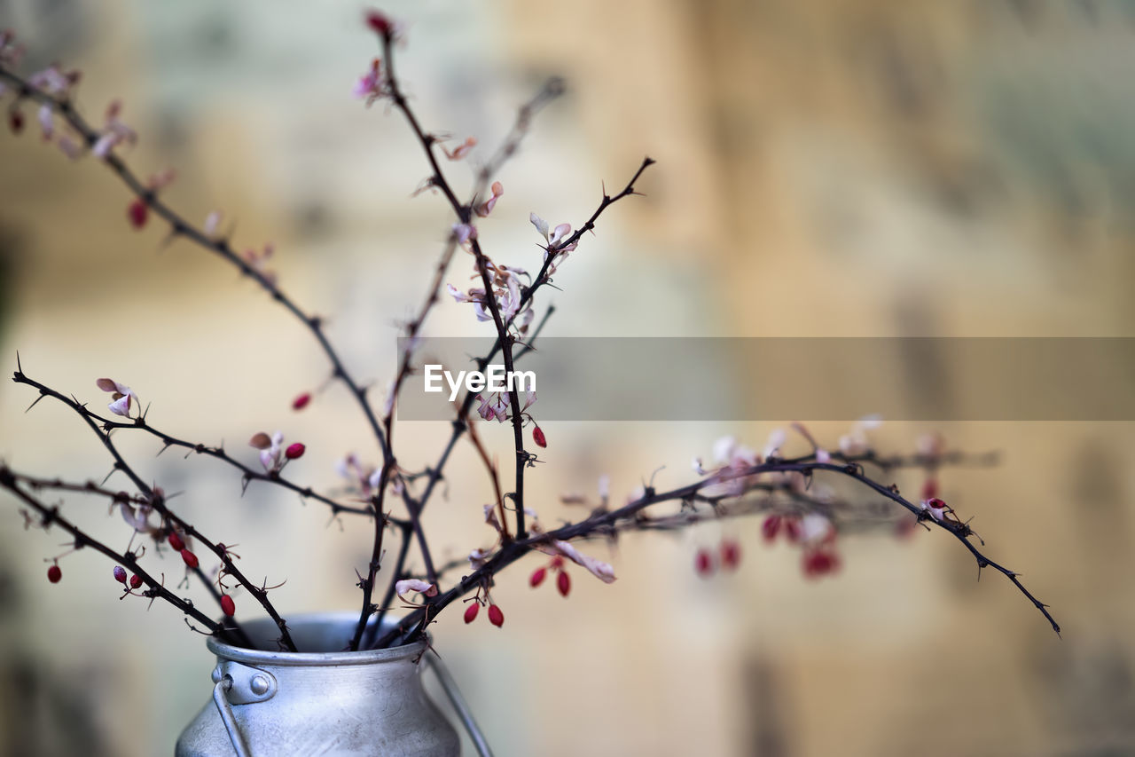focus on foreground, plant, tree, close-up, branch, no people, beauty in nature, nature, flower, flowering plant, day, growth, freshness, selective focus, pink color, springtime, outdoors, fragility, low angle view, vulnerability, cherry blossom