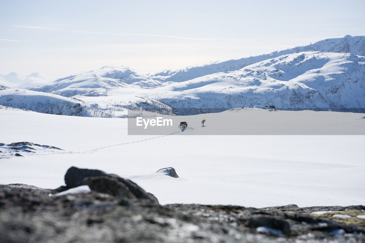cold temperature, winter, snow, mountain, beauty in nature, scenics - nature, day, mountain range, environment, sky, nature, tranquil scene, tranquility, white color, non-urban scene, landscape, rock, snowcapped mountain, adventure, outdoors