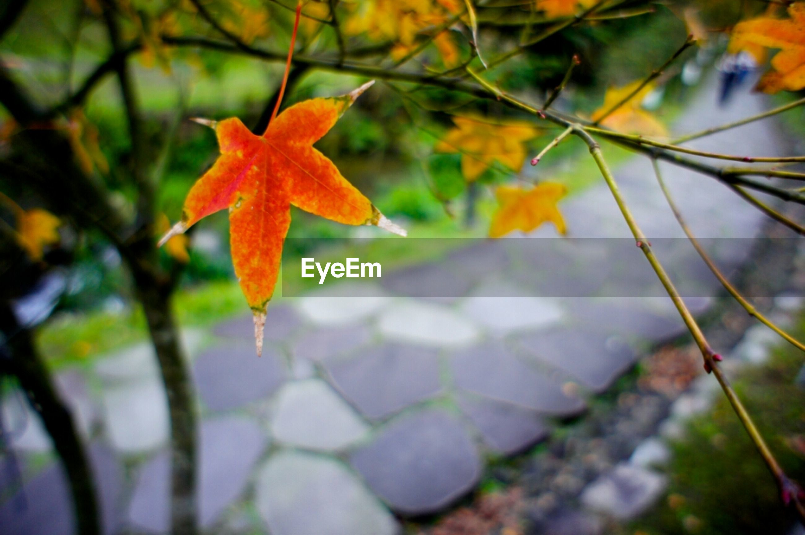 autumn, season, leaf, change, orange color, focus on foreground, close-up, growth, fragility, beauty in nature, nature, leaves, maple leaf, plant, freshness, flower, selective focus, drop, day, petal