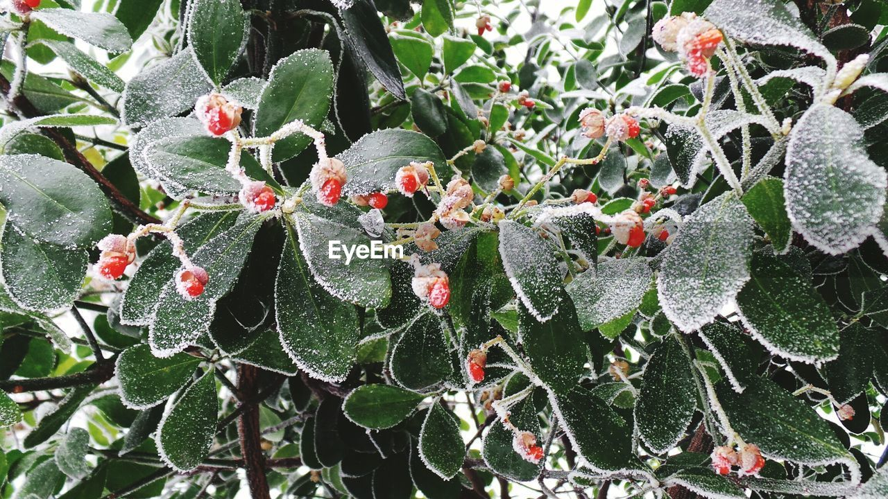nature, cold temperature, growth, green color, beauty in nature, day, outdoors, leaf, winter, plant, no people, close-up, snow, frozen, fragility, freshness