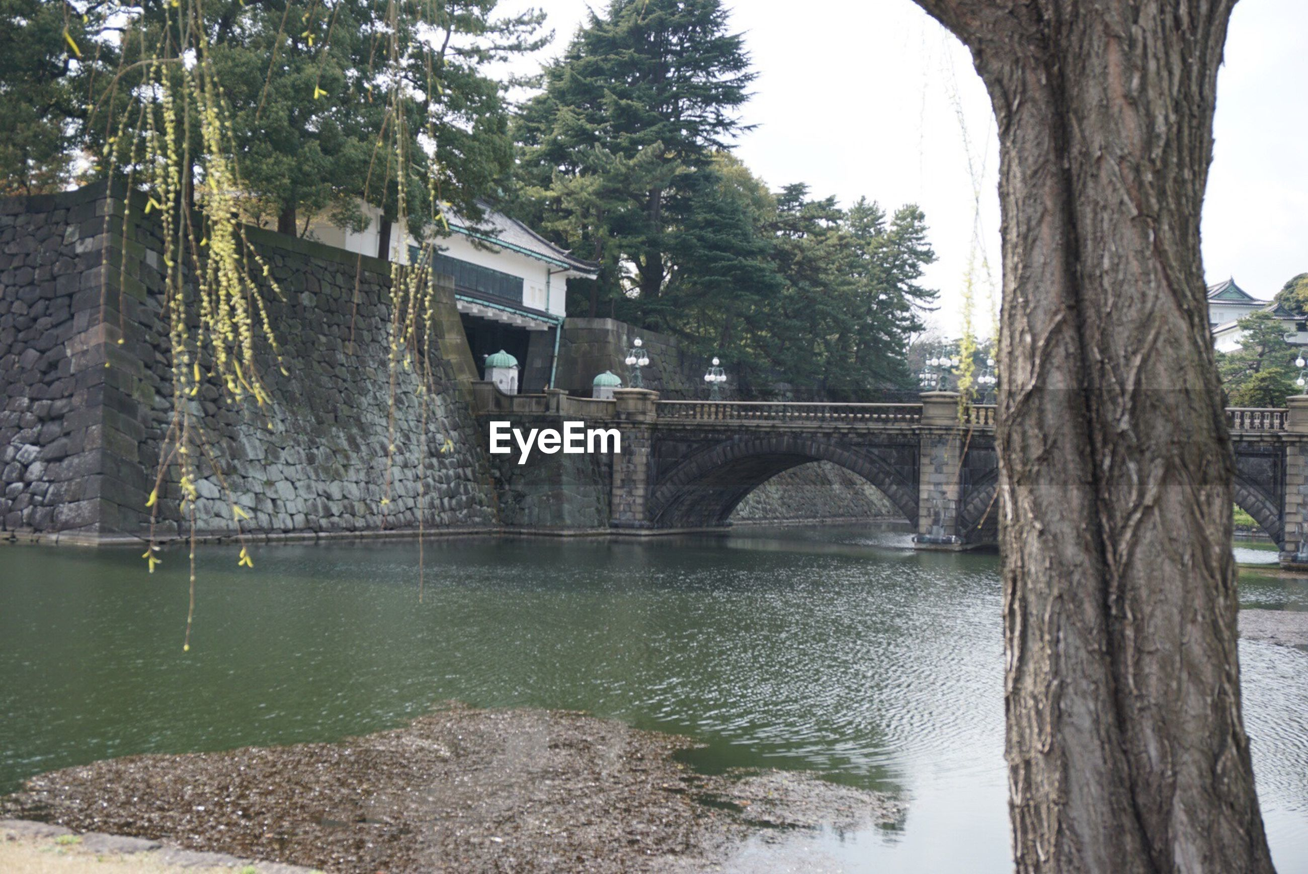 architecture, tree, built structure, connection, bridge - man made structure, water, day, arch, outdoors, building exterior, no people, nature