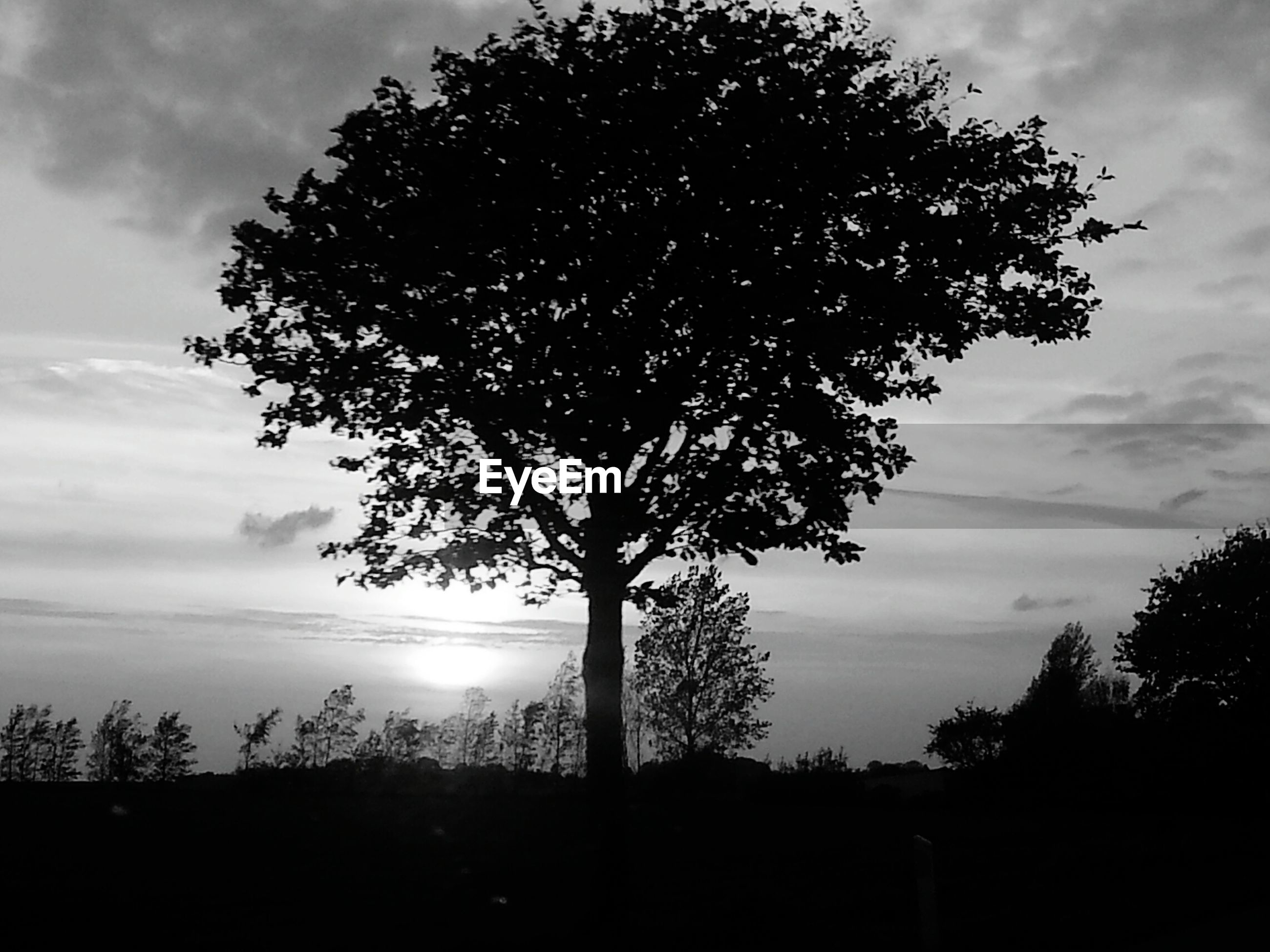 SILHOUETTE OF TREES ON LANDSCAPE