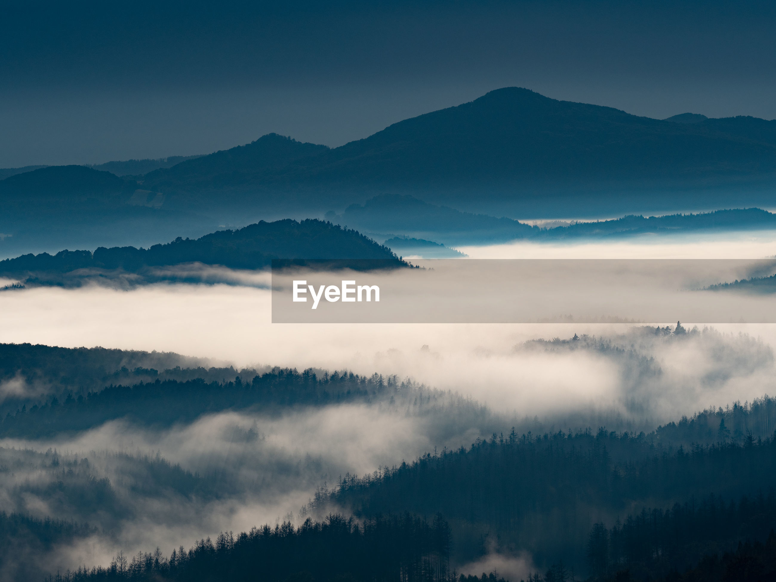 Fairy sunrise in hilly forest landscape in the morning. heavy mislky fog over the majestic forest