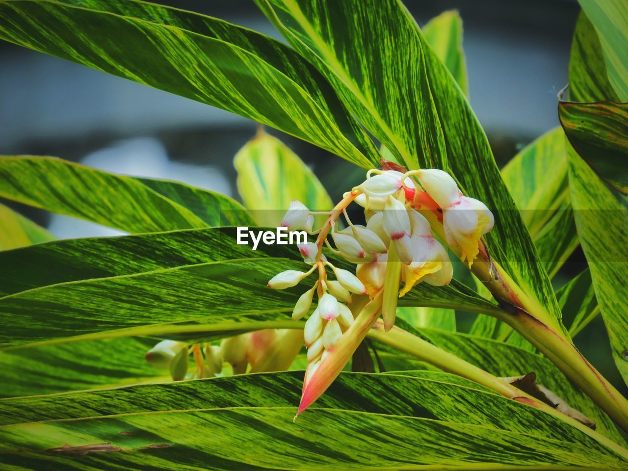 plant, growth, plant part, leaf, green color, close-up, beauty in nature, freshness, flower, nature, vulnerability, flowering plant, fragility, focus on foreground, no people, day, petal, flower head, inflorescence, white color, outdoors, pollen