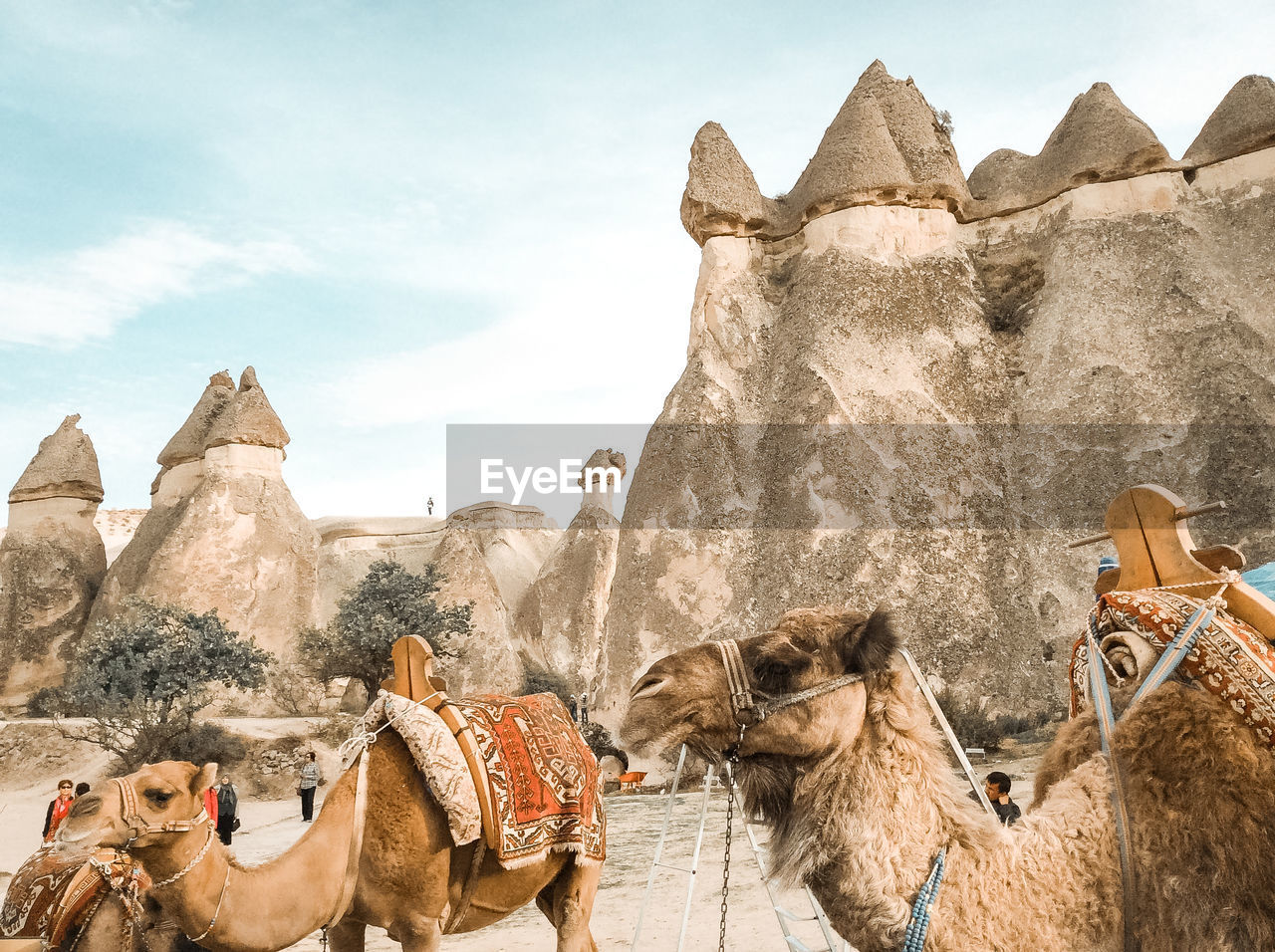 mammal, animal themes, animal, pets, camel, domestic animals, working animal, domestic, sky, group of animals, vertebrate, rock, nature, day, rock - object, livestock, desert, rock formation, solid, outdoors, herbivorous, animal head, arid climate, climate