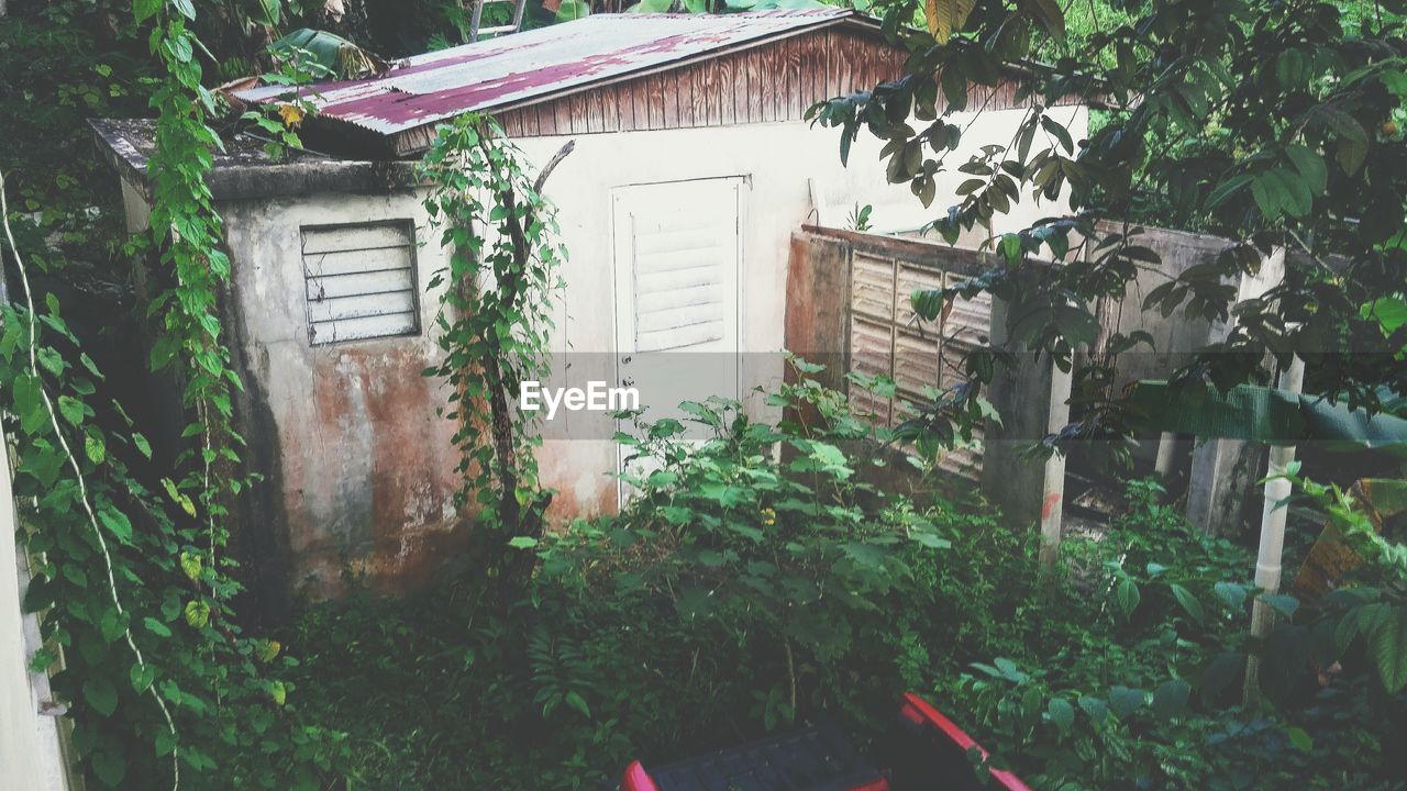 plant, architecture, house, built structure, door, building exterior, growth, outdoors, no people, nature, day