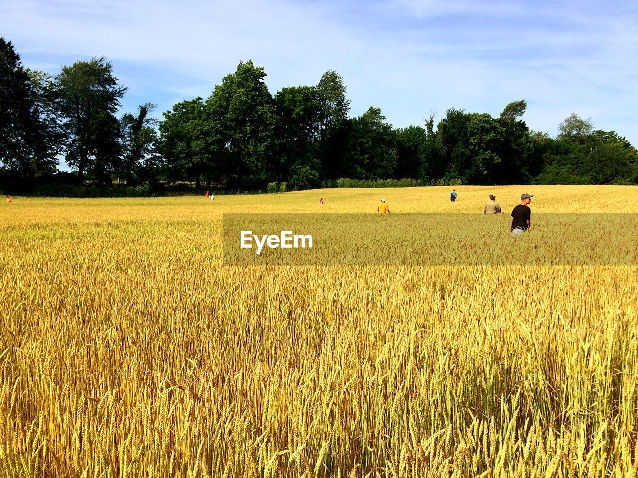field, tree, growth, agriculture, landscape, nature, sky, grass, real people, rural scene, scenics, outdoors, cloud - sky, day, beauty in nature, men, wheat, cereal plant, one person, people