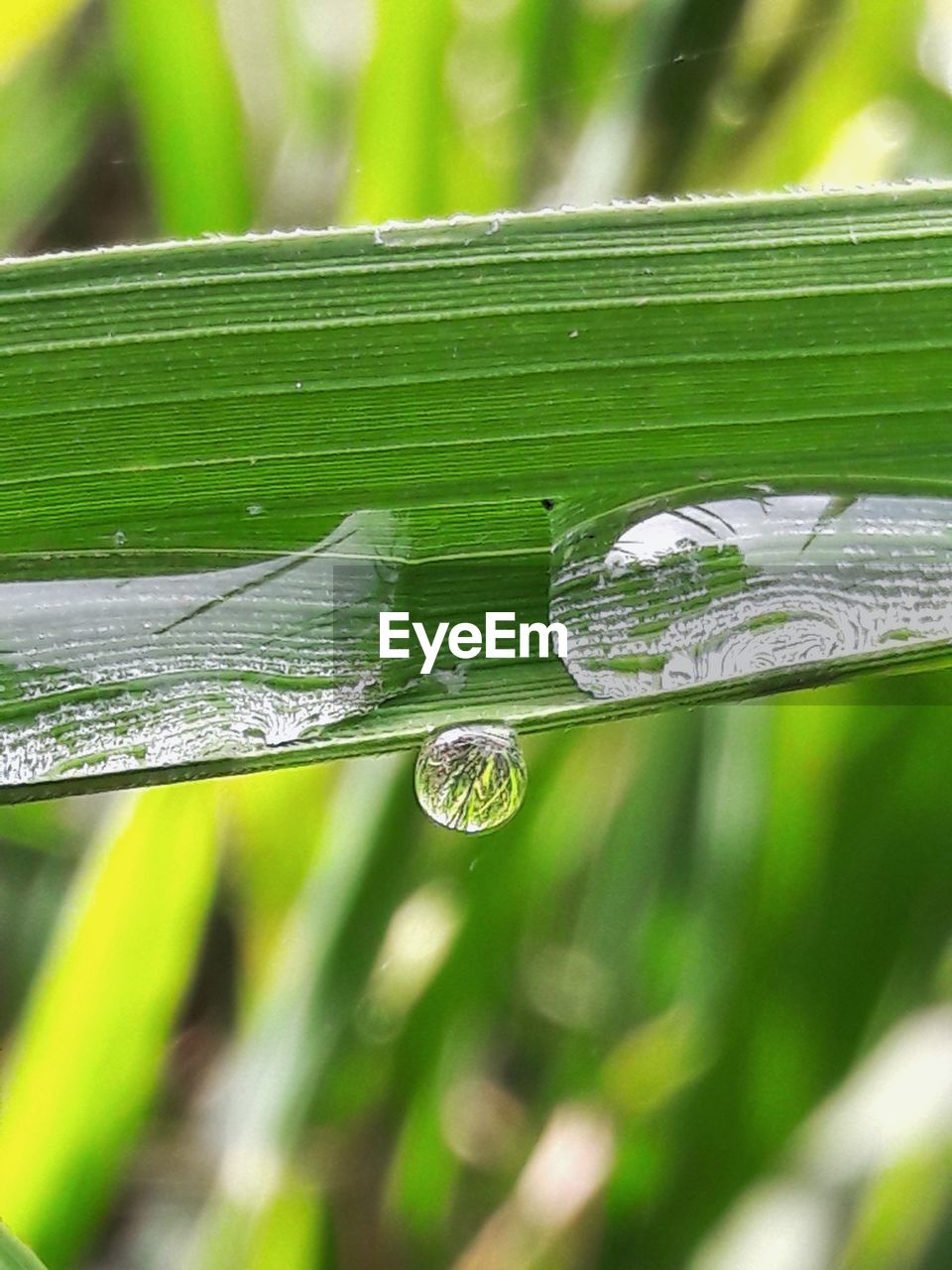 close-up, drop, focus on foreground, nature, water, fragility, day, growth, no people, outdoors, green color, leaf, plant, spider web, beauty in nature, freshness, grass, animal themes