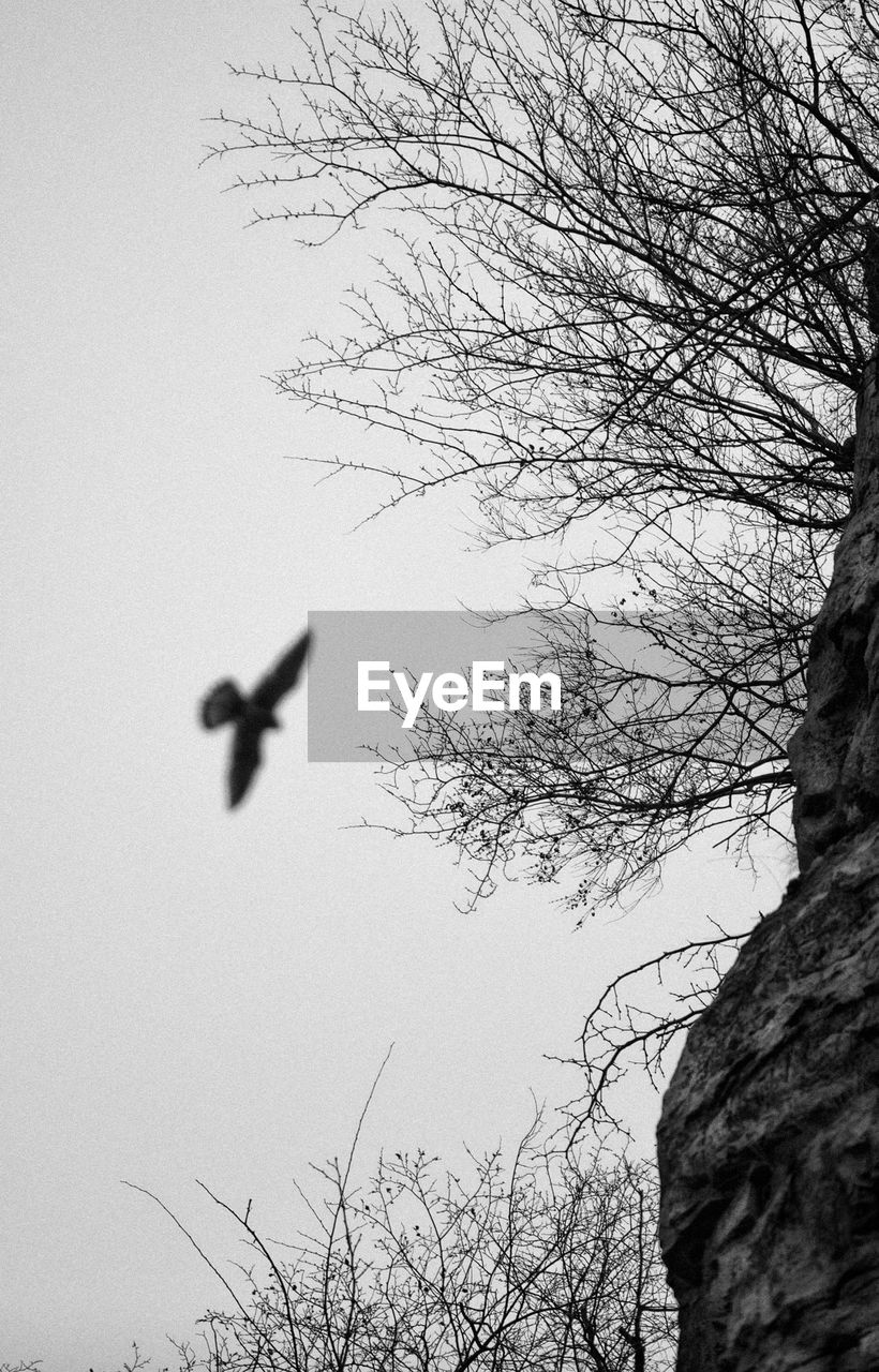 bare tree, flying, low angle view, tree, animal themes, no people, nature, mid-air, day, outdoors, animals in the wild, one animal, branch, beauty in nature, bird, sky