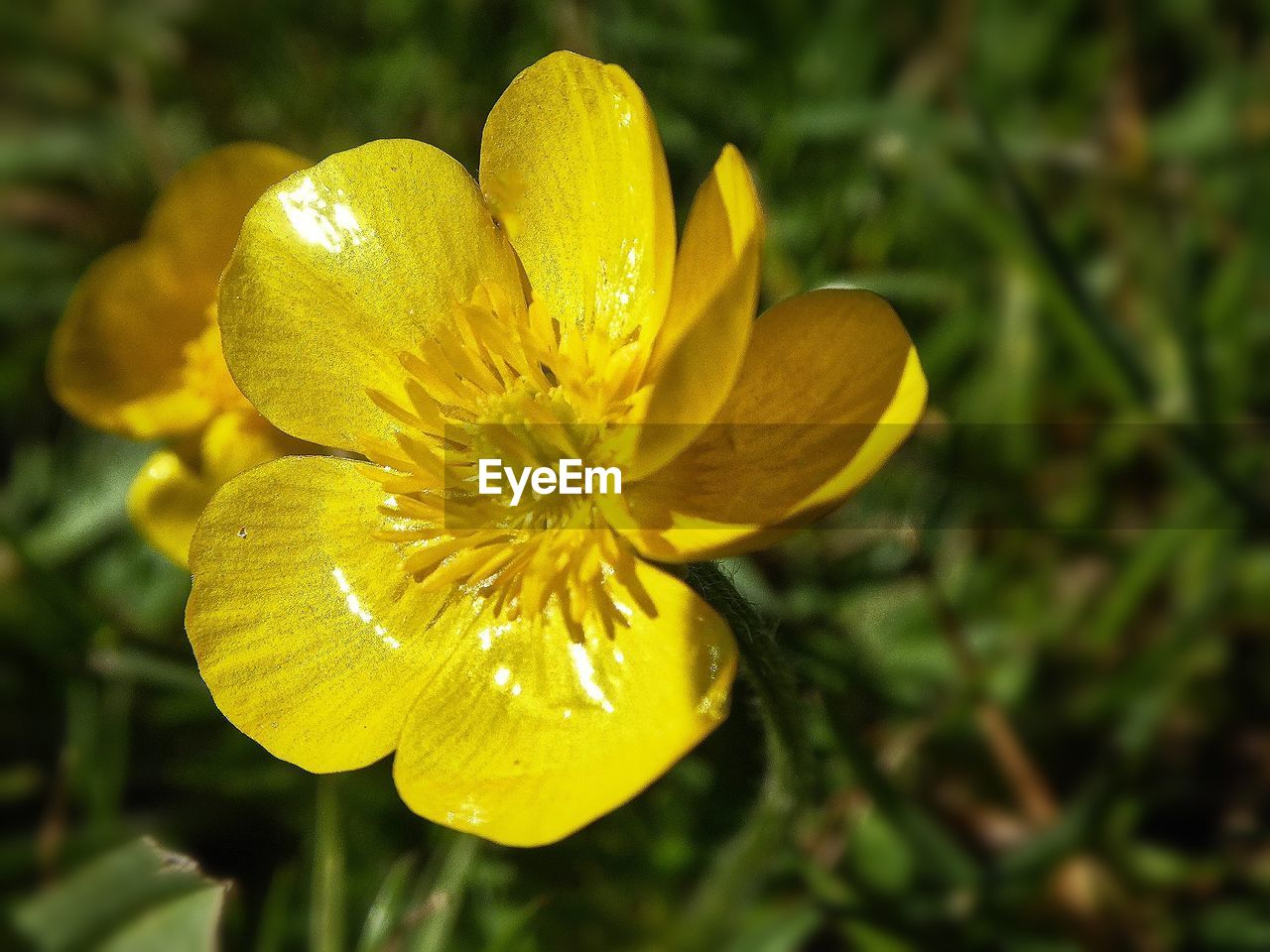 flower, yellow, petal, growth, nature, fragility, beauty in nature, freshness, flower head, no people, plant, close-up, outdoors, focus on foreground, day, blooming, springtime