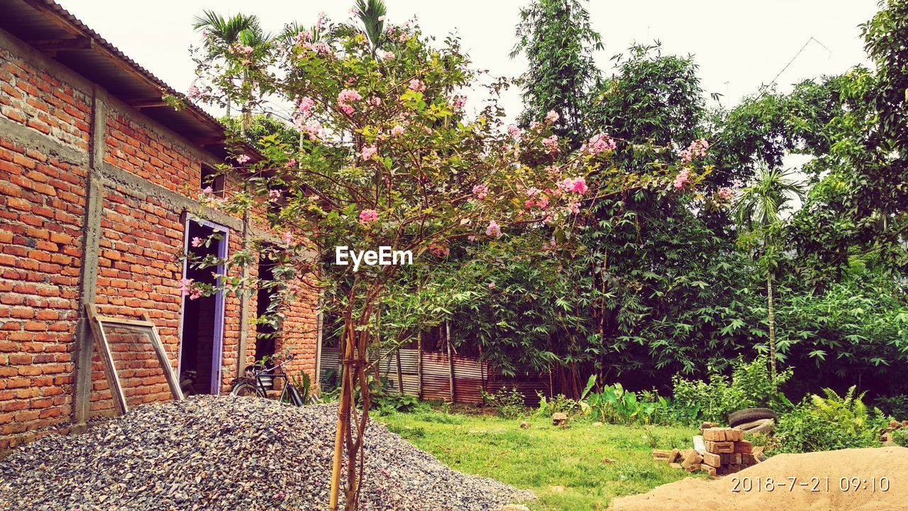 plant, growth, tree, architecture, built structure, day, nature, building exterior, flower, flowering plant, no people, building, outdoors, house, beauty in nature, grass, freshness, front or back yard, blossom, green color