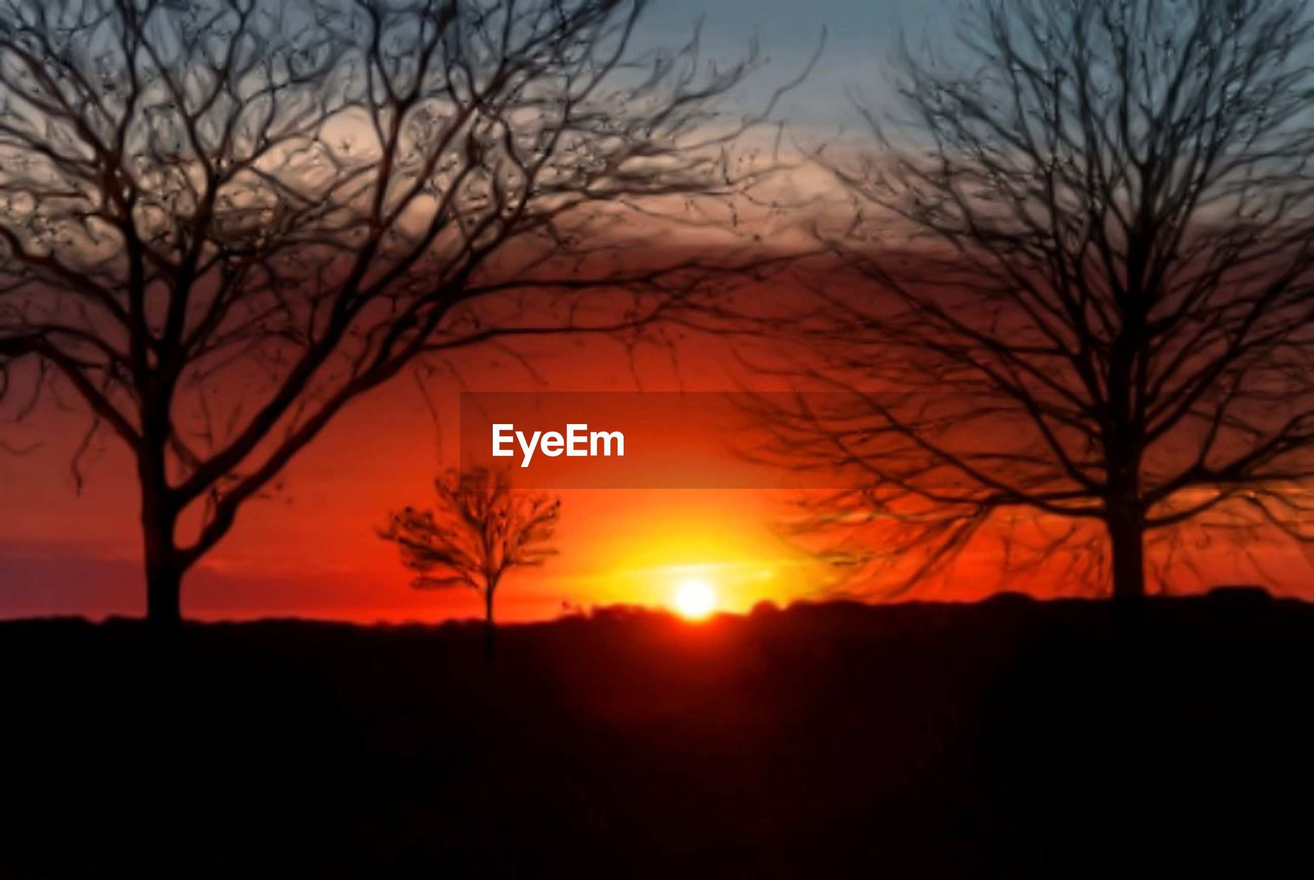 silhouette, tree, sunset, sky, scenics - nature, orange color, plant, bare tree, beauty in nature, tranquil scene, tranquility, sun, environment, nature, no people, landscape, branch, land, outdoors, non-urban scene