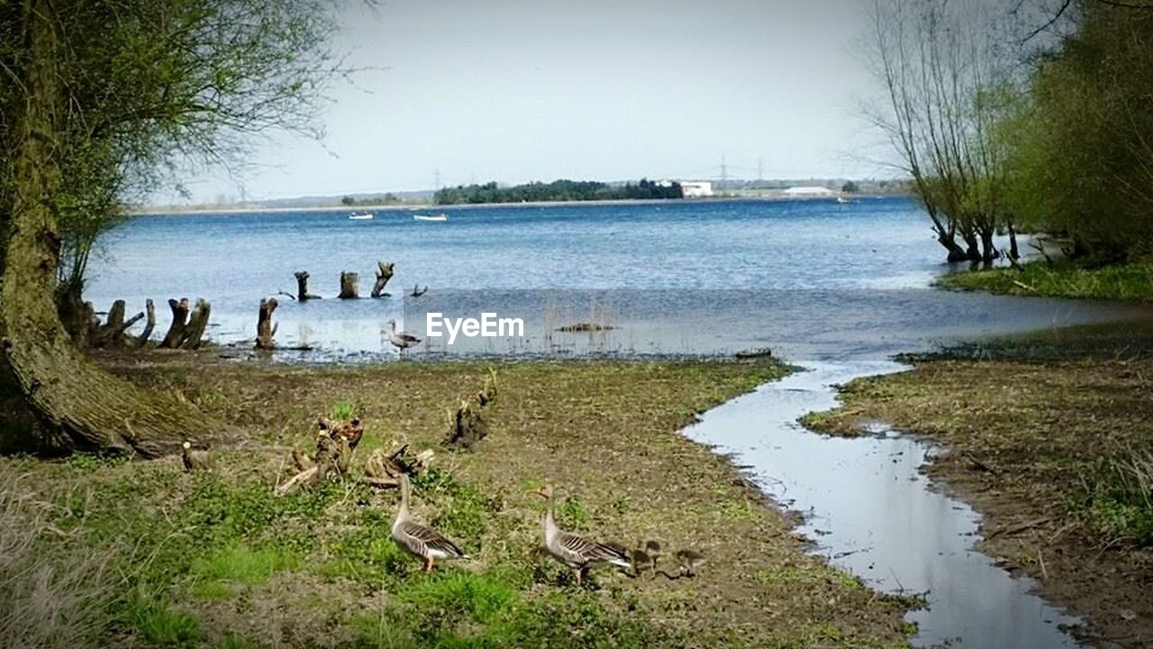 water, animal themes, lake, large group of animals, animals in the wild, day, nature, tree, no people, grass, bird, outdoors, animal wildlife, landscape, beauty in nature, sky, mammal