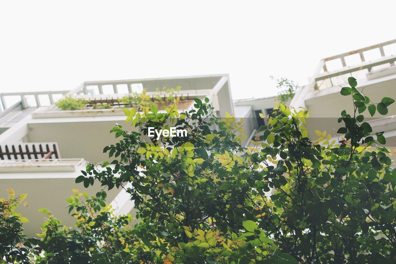 architecture, built structure, growth, building exterior, plant, leaf, clear sky, low angle view, tree, day, nature, outdoors, no people, green color, ivy, flower, beauty in nature, freshness, window box, city, close-up, sky