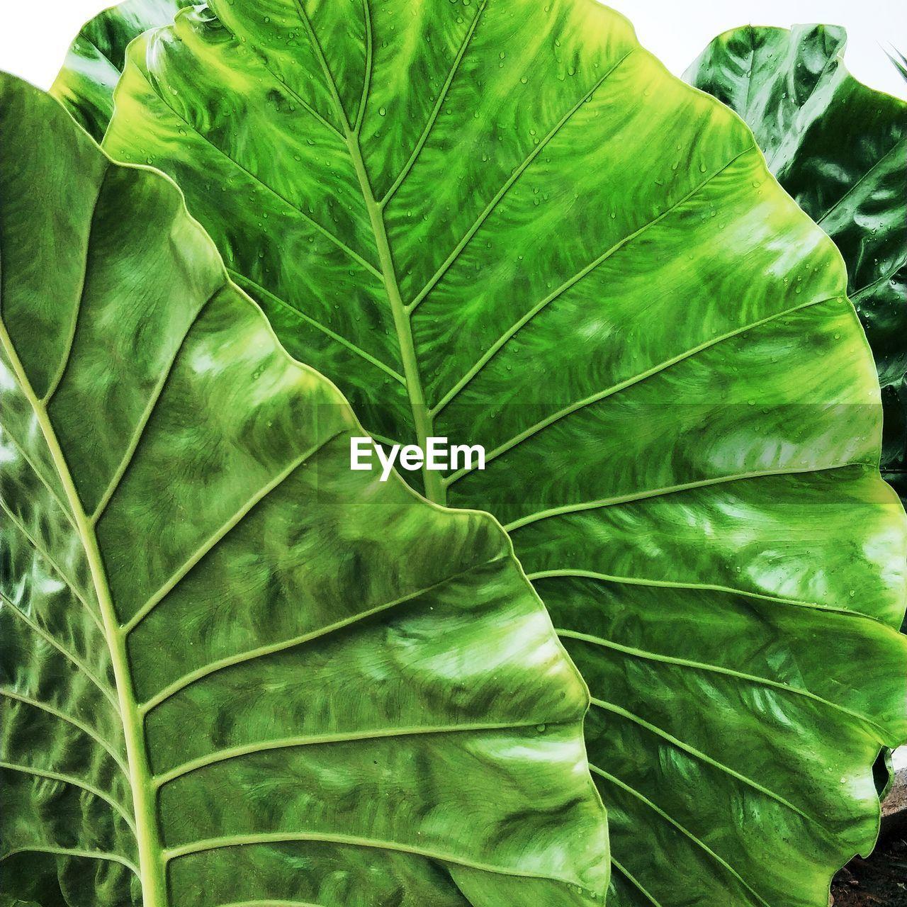 Close-Up Of Leaf Vegetables