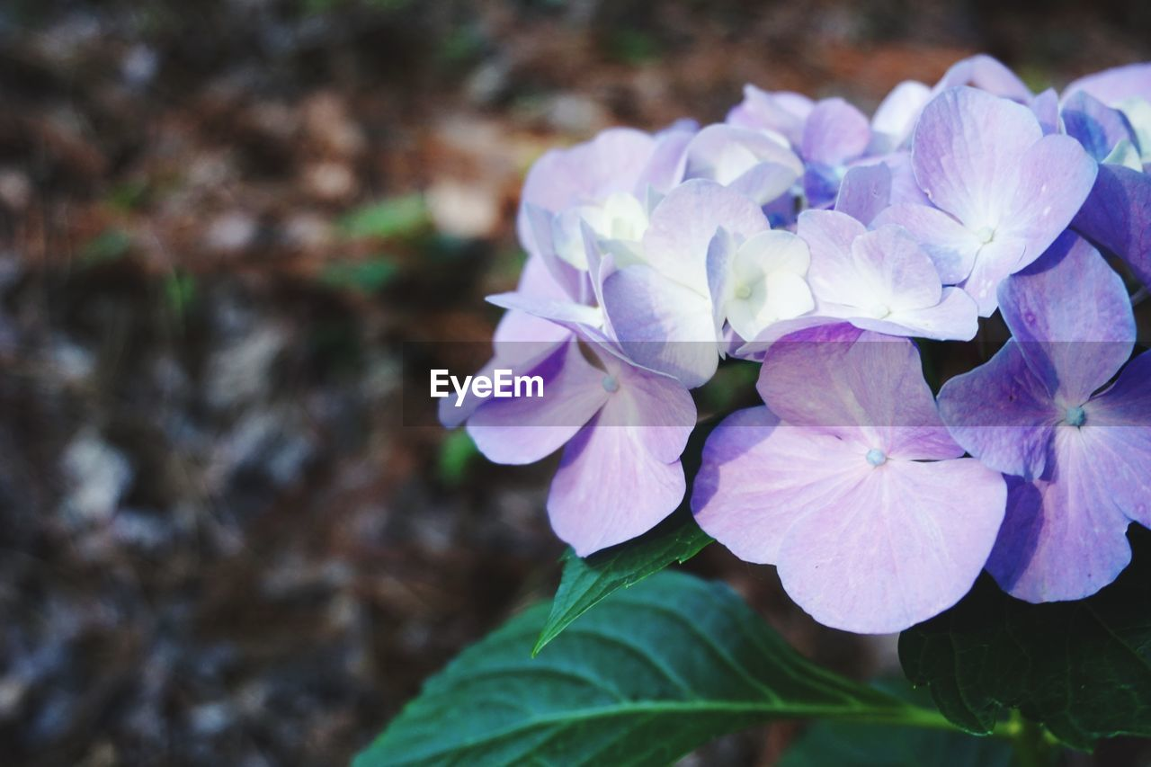 flower, nature, beauty in nature, plant, petal, growth, fragility, freshness, blooming, no people, outdoors, flower head, close-up, day
