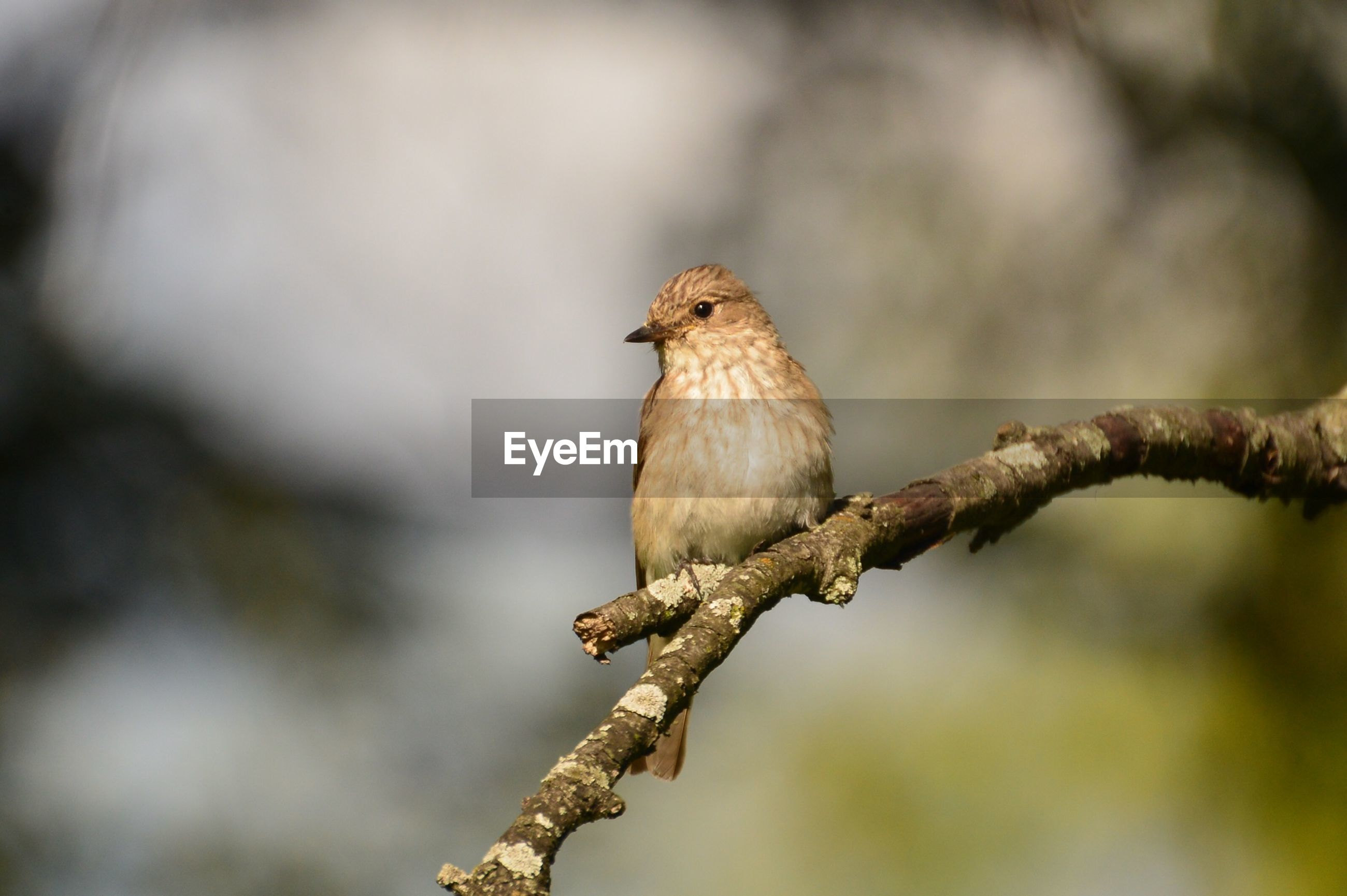 animal themes, animals in the wild, one animal, wildlife, perching, bird, branch, focus on foreground, full length, nature, tree, close-up, twig, outdoors, day, selective focus, zoology, no people, low angle view, side view