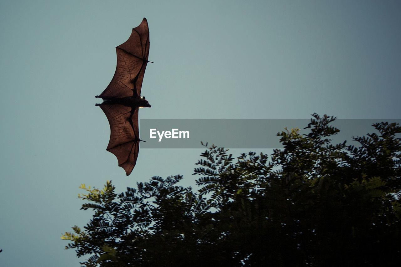Low Angle View Of Bat Against Clear Sky