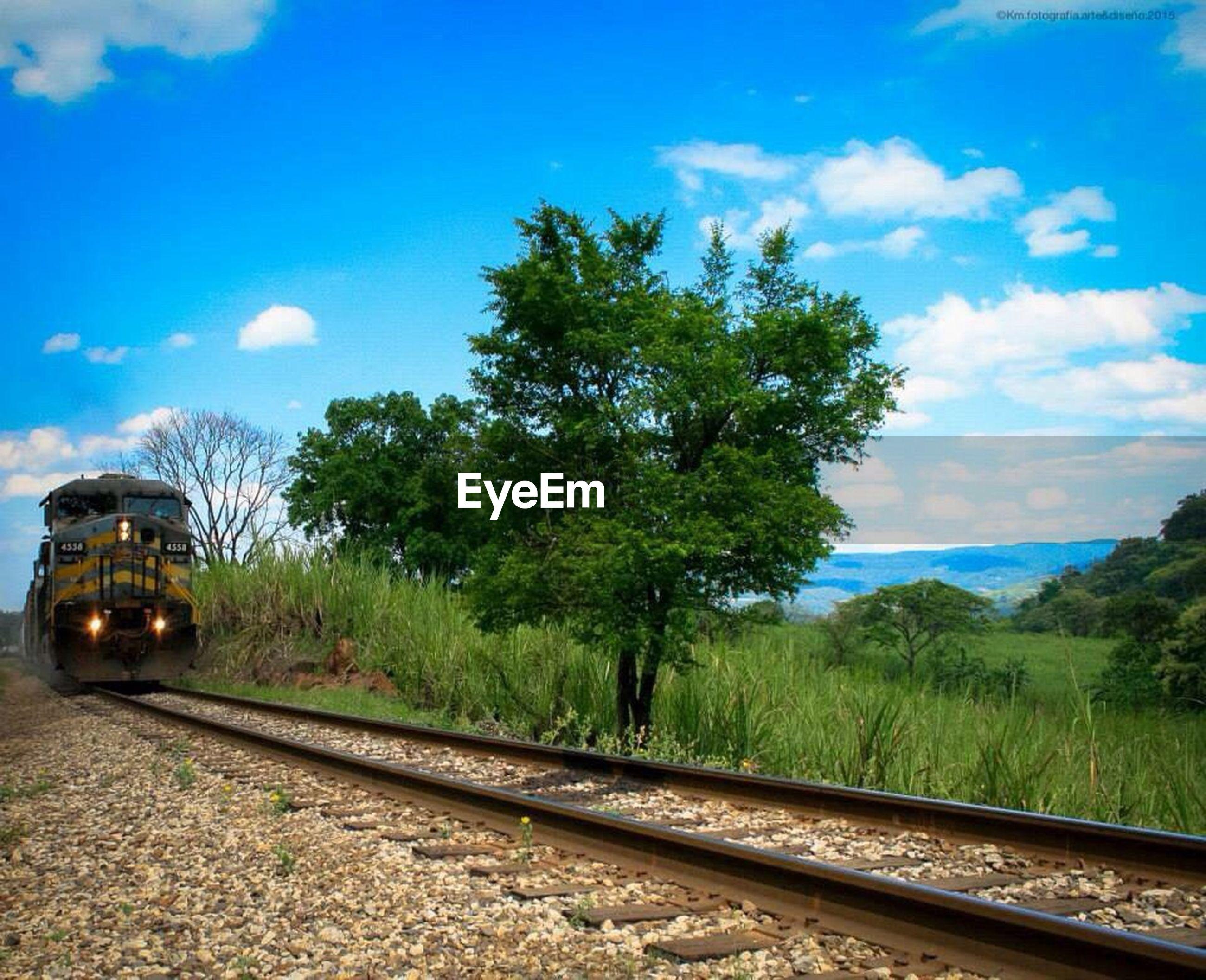 tree, sky, railroad track, transportation, rail transportation, blue, cloud - sky, cloud, landscape, tranquil scene, nature, tranquility, scenics, road, growth, public transportation, sunlight, no people, outdoors, travel