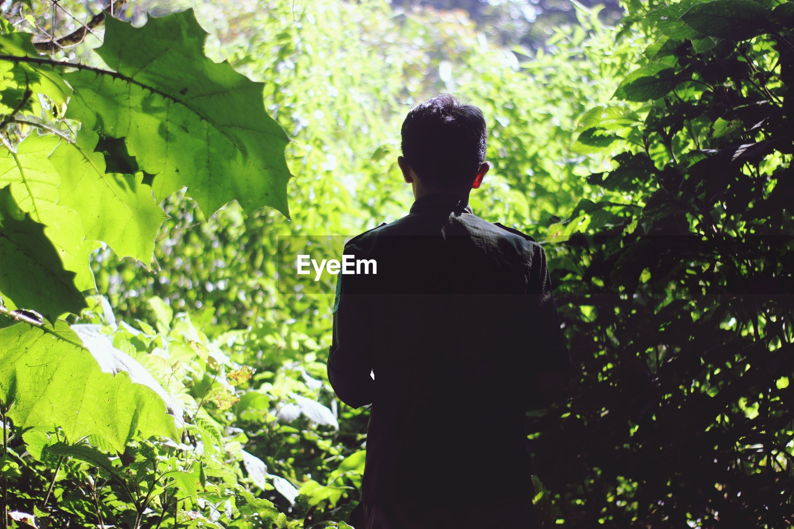 Rear view of young man standing amidst plants in forest