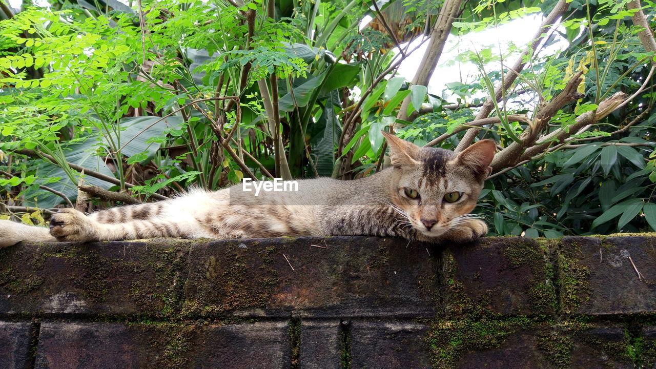 PORTRAIT OF CAT LYING OUTDOORS