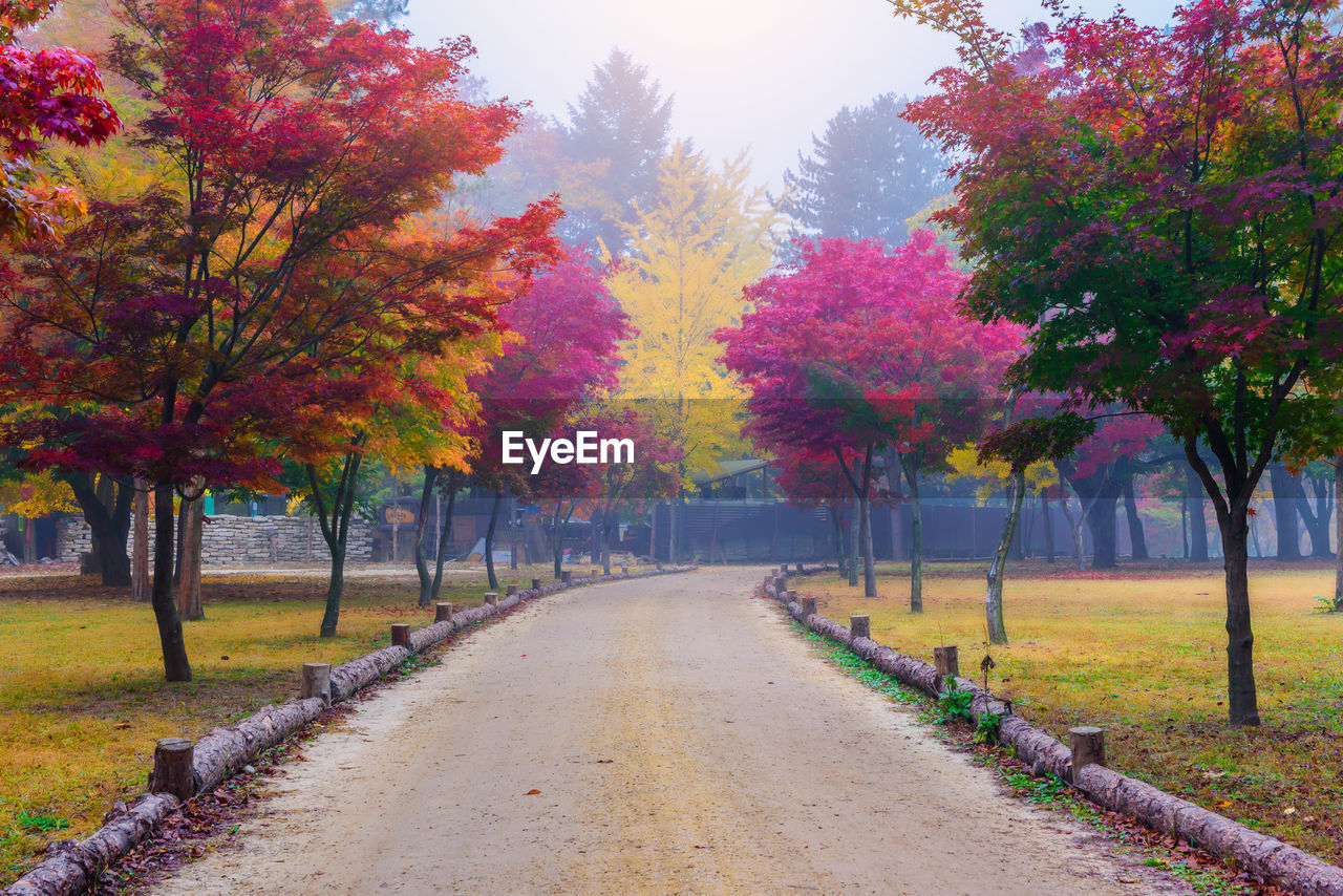 plant, tree, autumn, change, beauty in nature, direction, the way forward, road, nature, footpath, tranquil scene, diminishing perspective, growth, tranquility, no people, day, scenics - nature, park, outdoors, transportation, treelined, autumn collection, fall
