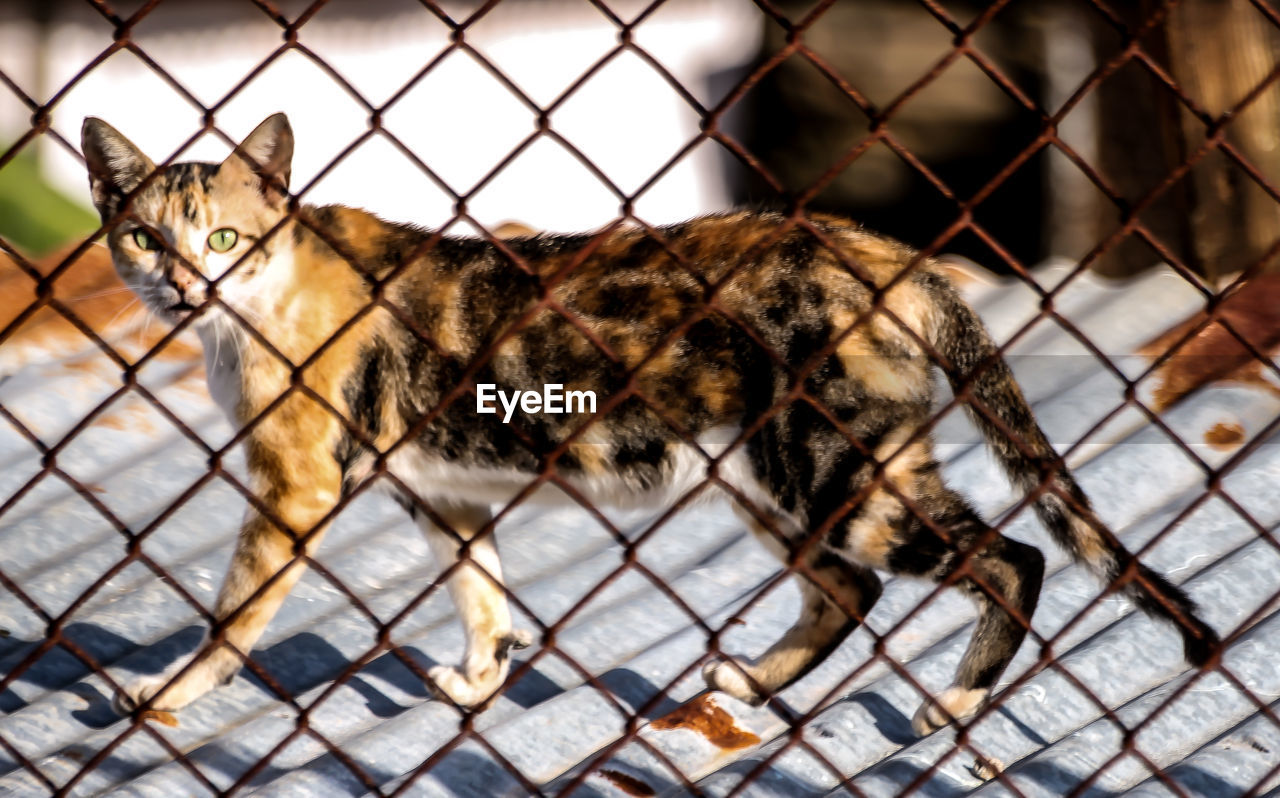 animal themes, domestic cat, feline, chainlink fence, one animal, domestic animals, mammal, pets, safety, carnivora, day, protection, focus on foreground, no people, outdoors
