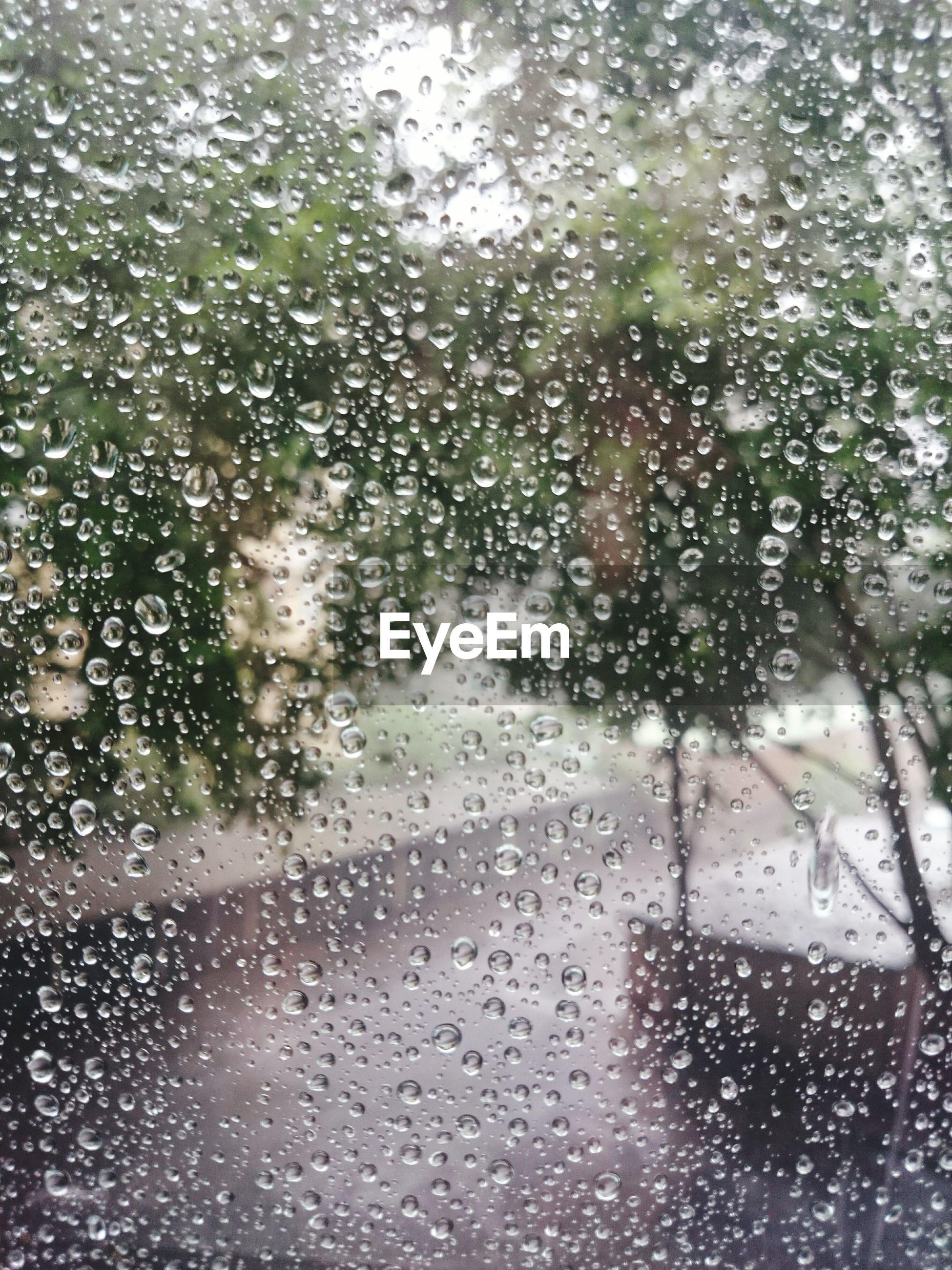 Trees seen through wet glass window on rainy day