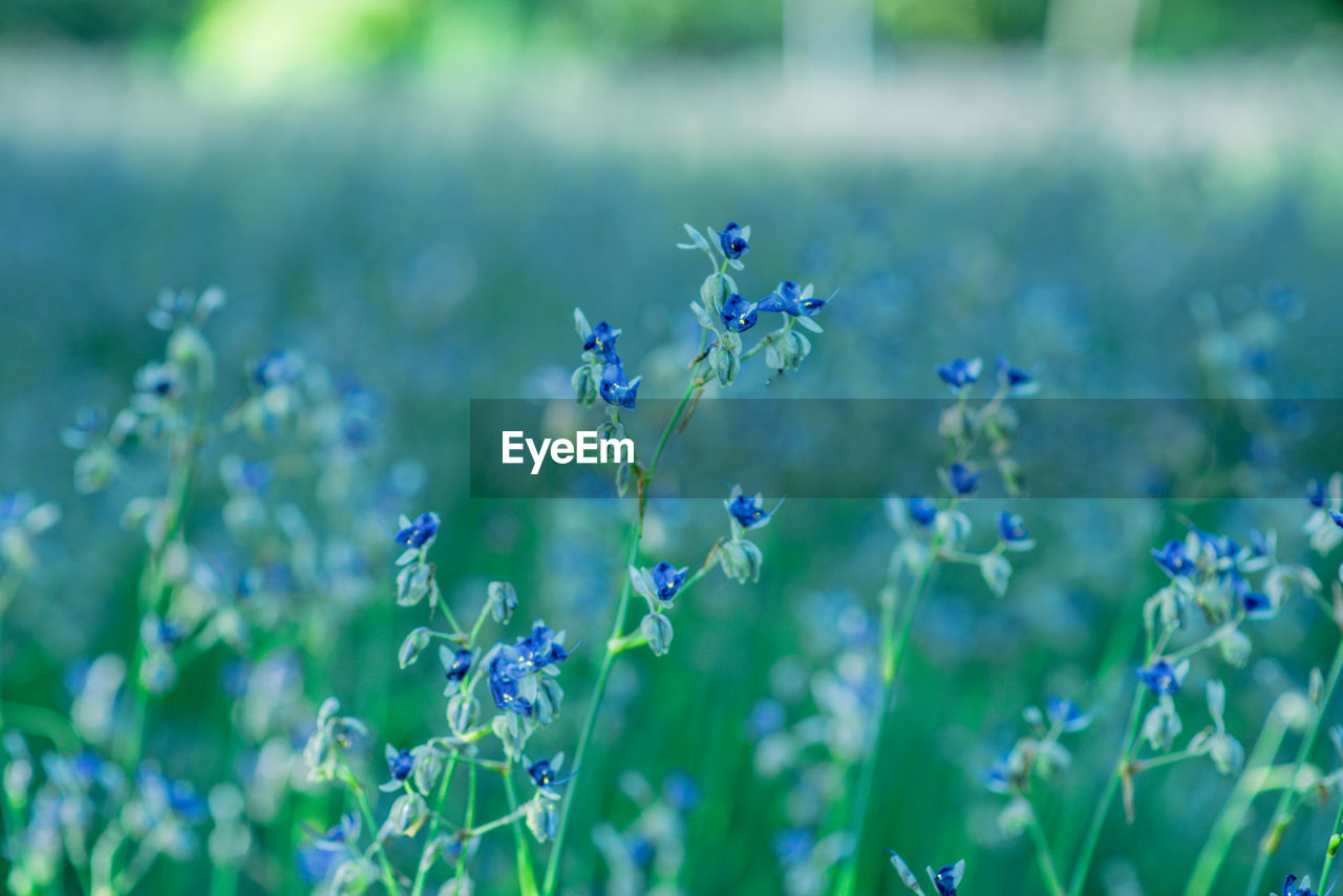 flowering plant, flower, plant, fragility, vulnerability, growth, freshness, beauty in nature, petal, purple, close-up, nature, invertebrate, blue, animals in the wild, insect, day, animal themes, animal wildlife, no people, flower head, pollination, lavender