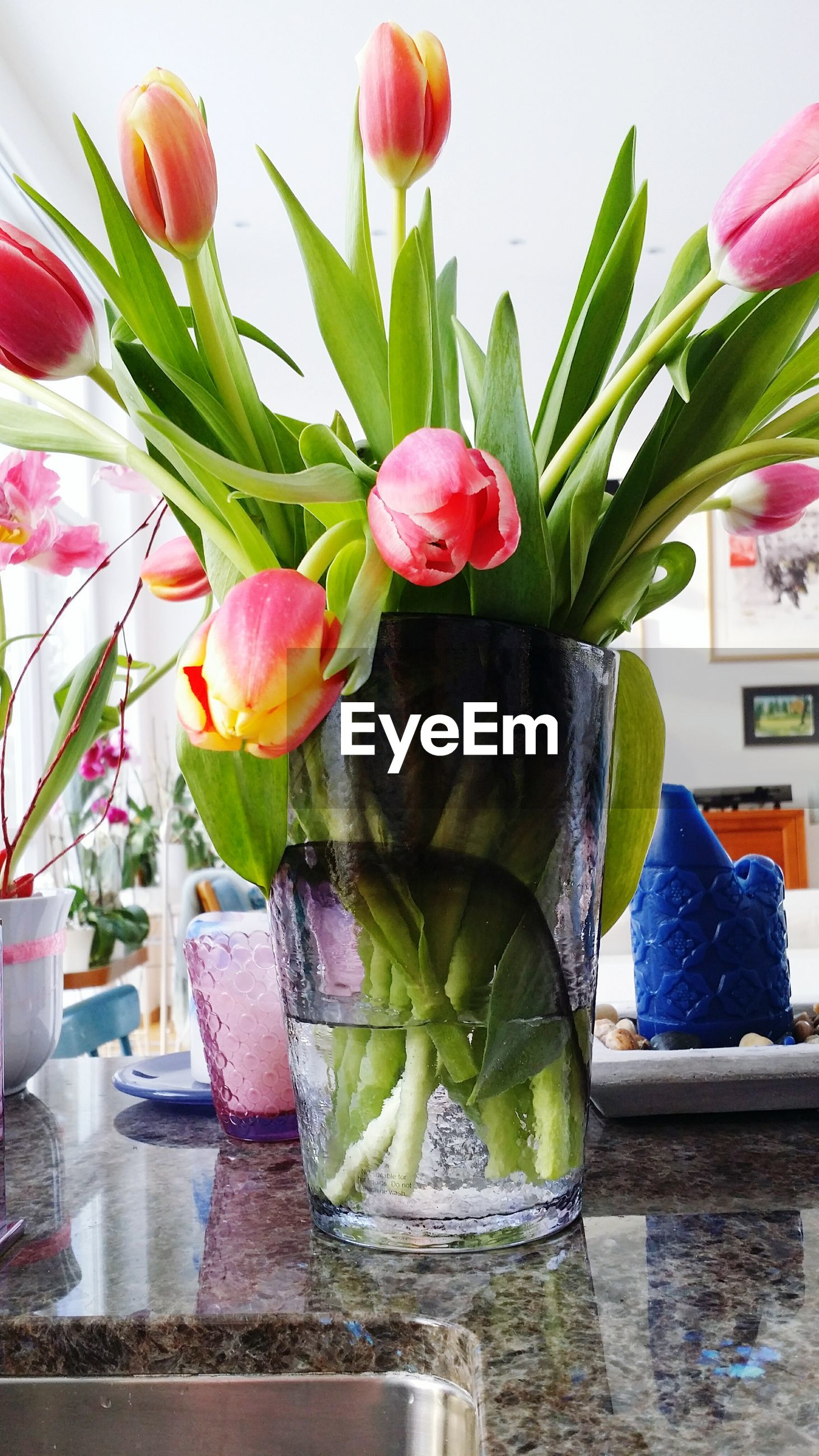 flower, freshness, vase, fragility, indoors, potted plant, leaf, plant, growth, decoration, petal, wall - building feature, nature, flower arrangement, close-up, glass - material, flower pot, beauty in nature, stem, red