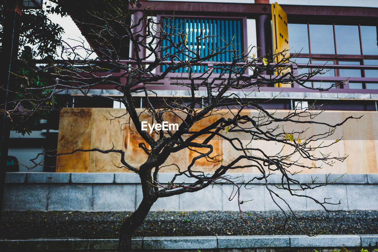 tree, architecture, built structure, plant, building exterior, branch, no people, nature, bare tree, day, outdoors, building, wall - building feature, wall, window, metal, graffiti, creativity, abandoned, art and craft