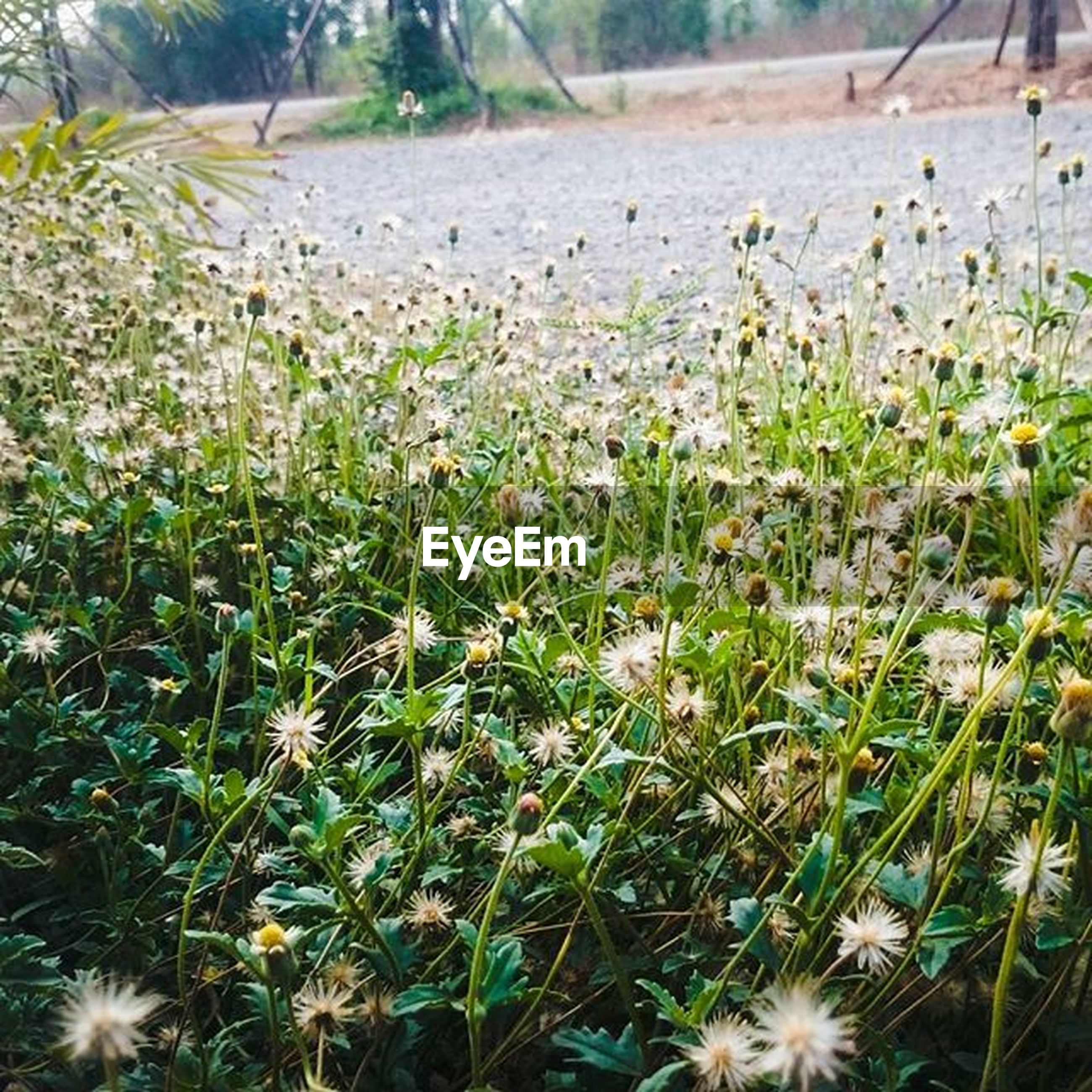 growth, plant, flower, grass, field, nature, freshness, beauty in nature, sunlight, tranquility, fragility, outdoors, day, growing, no people, blooming, focus on foreground, high angle view, tranquil scene, landscape