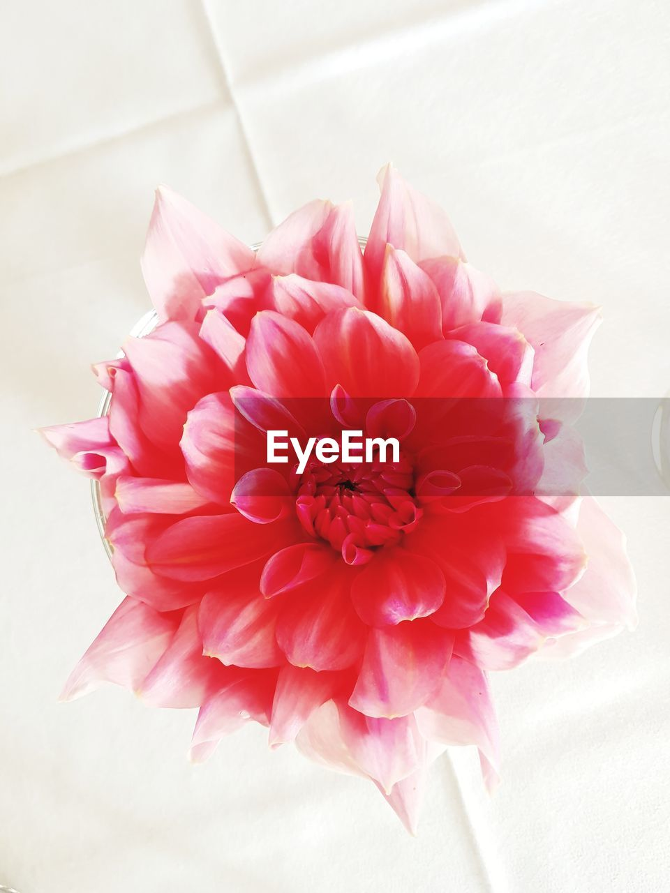 flower, petal, pink color, flower head, fragility, freshness, rose - flower, no people, beauty in nature, nature, close-up, dahlia, bouquet, indoors, day