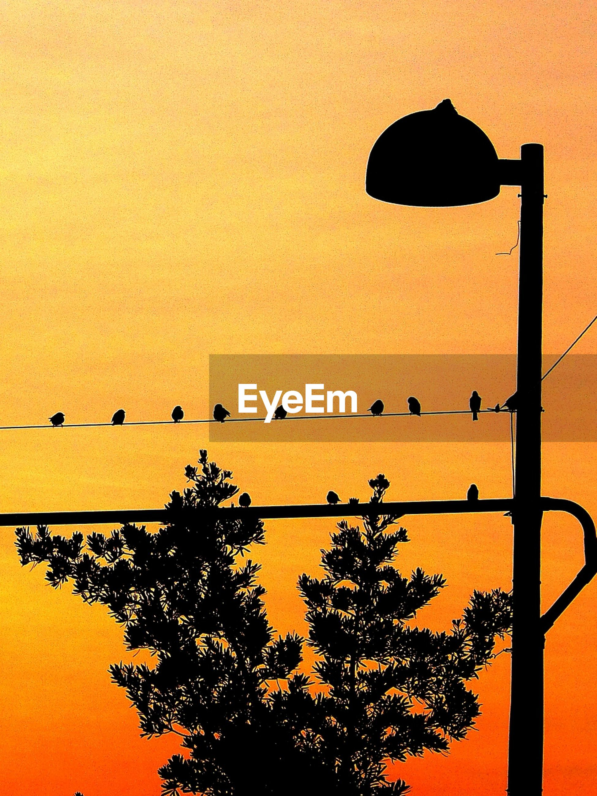 sunset, low angle view, silhouette, orange color, clear sky, bird, animal themes, perching, animals in the wild, sky, tree, branch, wildlife, nature, street light, outdoors, dusk, built structure, no people, beauty in nature