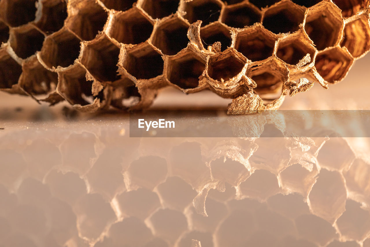 close-up, honeycomb, pattern, no people, hexagon, natural pattern, beehive, nature, apiculture, day, insect, invertebrate, animals in the wild, shape, selective focus, bee, animal, animal themes, focus on foreground, textured