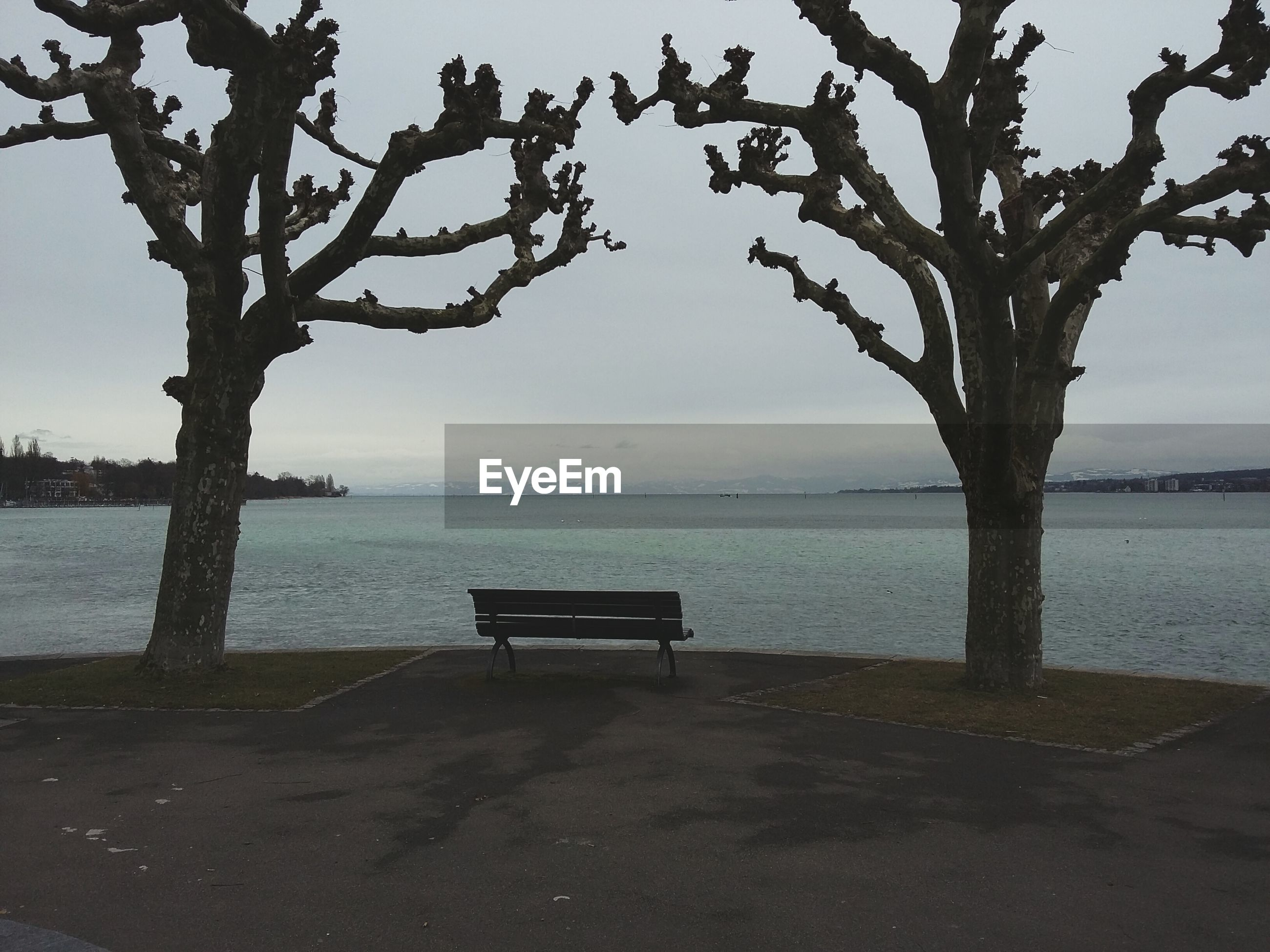 Empty bench amidst bare trees at lakeshore