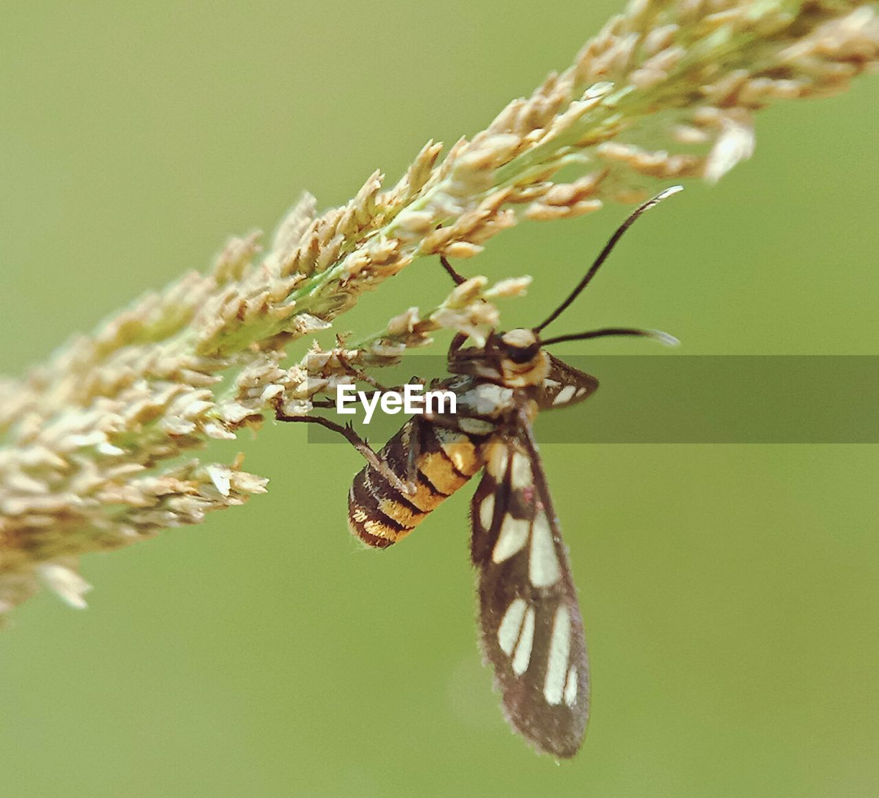 animal wildlife, animal themes, insect, animal, invertebrate, animals in the wild, one animal, close-up, plant, beauty in nature, nature, focus on foreground, no people, day, animal wing, selective focus, growth, plant part, outdoors, leaf, butterfly - insect