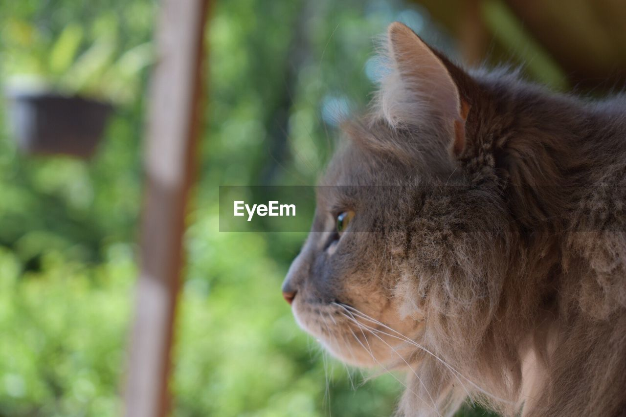 one animal, animal themes, animal, mammal, focus on foreground, vertebrate, cat, feline, pets, domestic animals, domestic, close-up, looking, day, looking away, domestic cat, no people, side view, animal wildlife, animal body part, whisker, outdoors, animal head, profile view, herbivorous